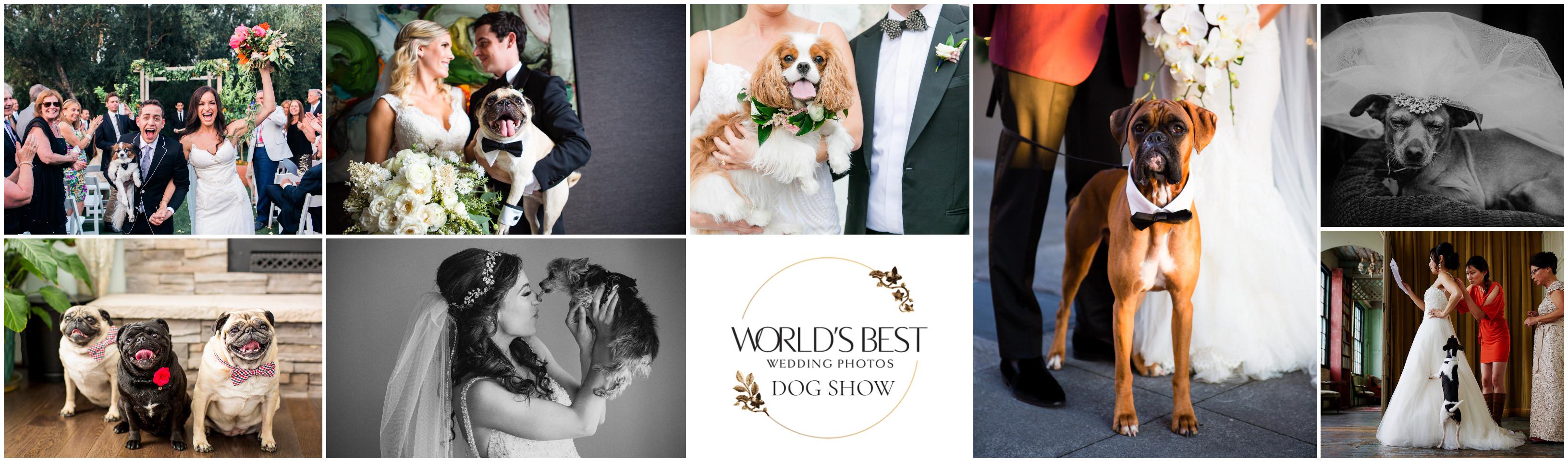 World's Best Wedding Photos Dog Show Contest
