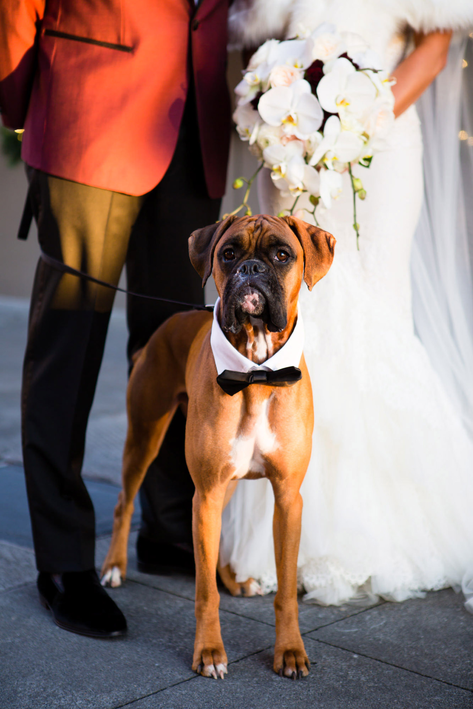 dog-show-lavie-worlds-best-wedding-photos-dog-in-tux