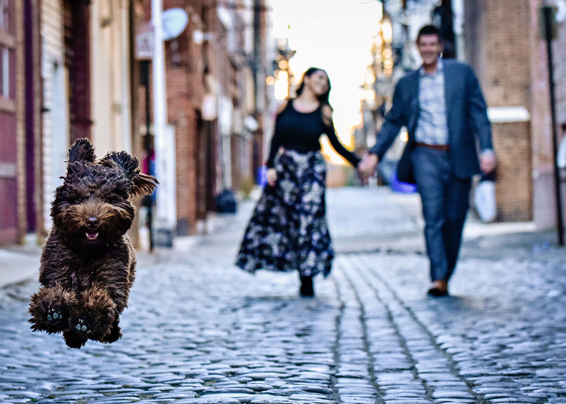 dog-show-jeff-tisman-worlds-best-wedding-photos-engagement-photos-with-running-dog