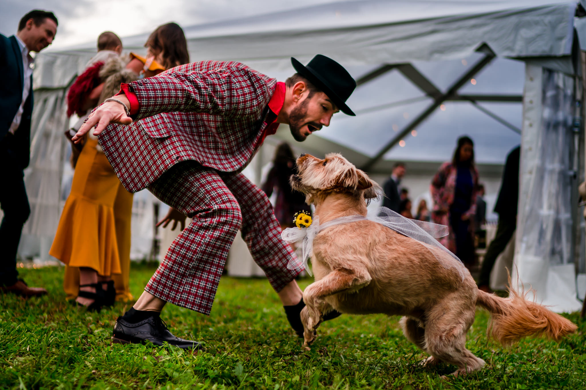 dog-show-bee-two-sweet-worlds-best-wedding-photos-man-playing-with-dog