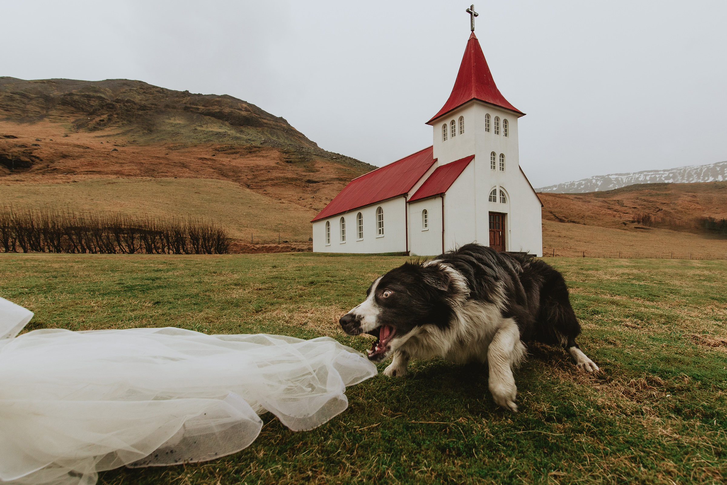 dog-show-fotolux-worlds-best-wedding-photos-dog-and-church