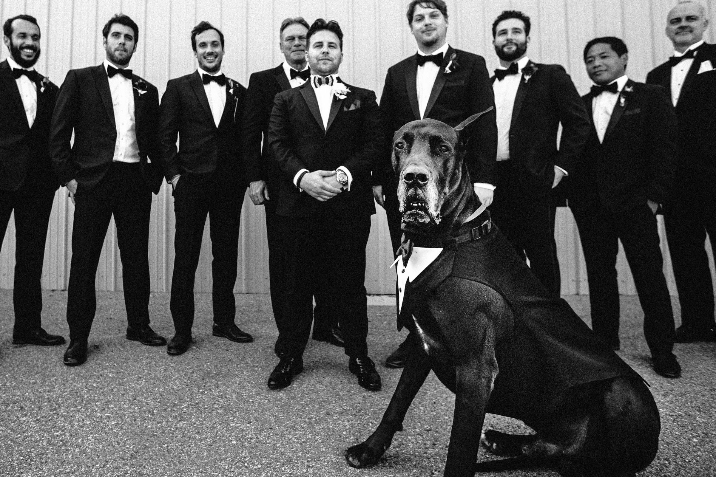 dog-show-callaway-gable-worlds-best-wedding-photos-tuxedo-great-dane