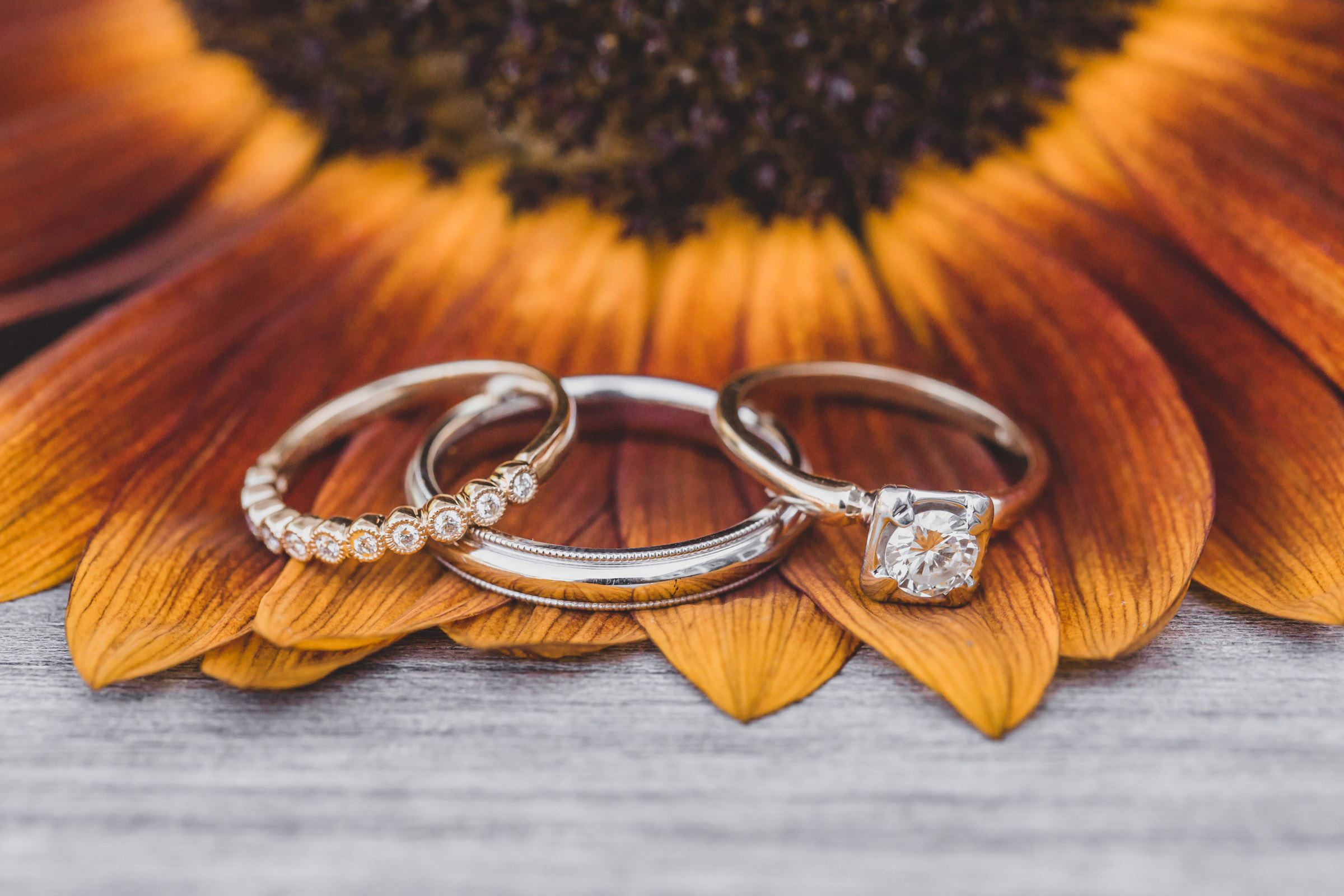 rings-displayed-on-flower-petals-katie-kaizer-photography