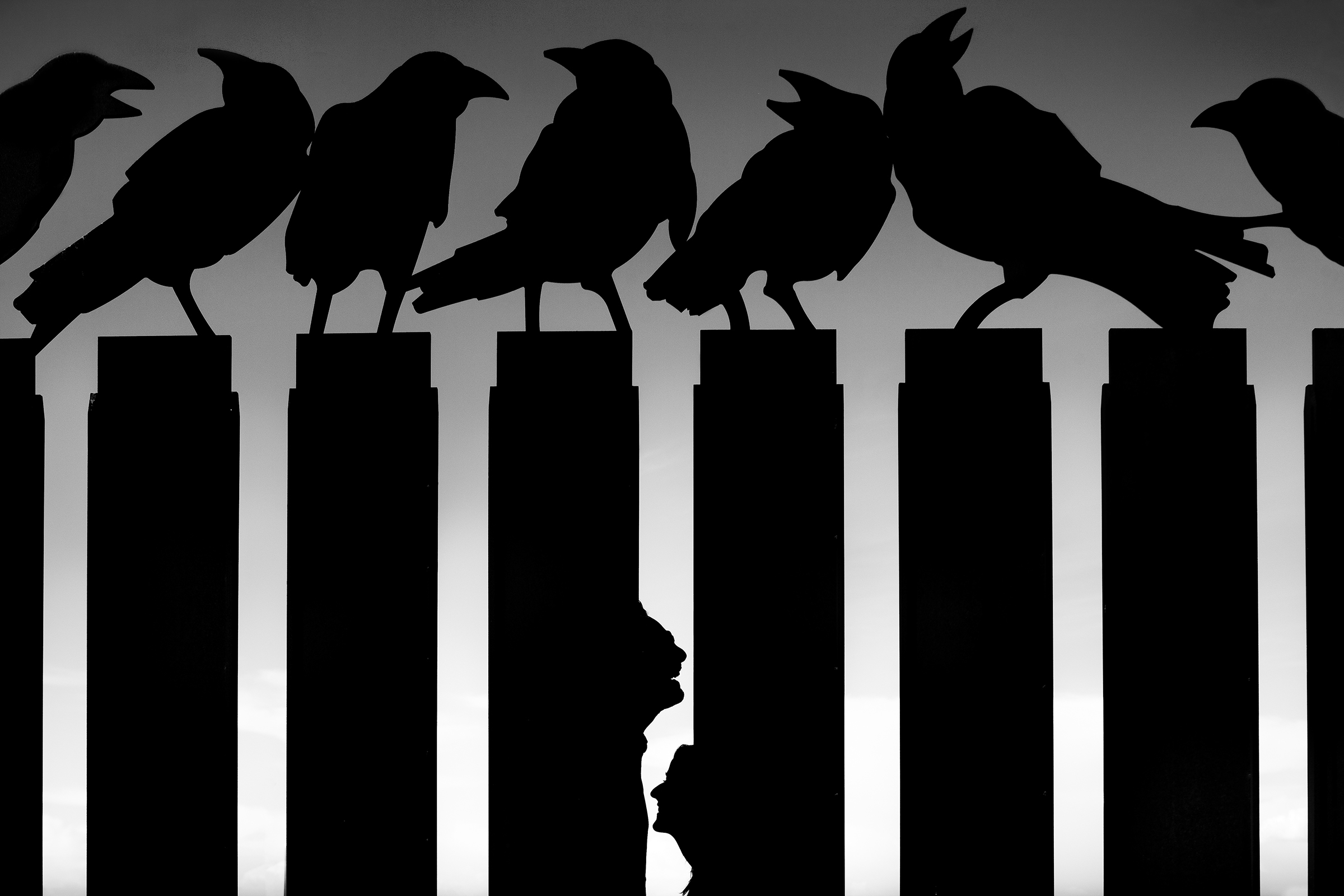 50-best-wedding-photo-concepts-silhouette-with-crows-by-lax-photography-spain