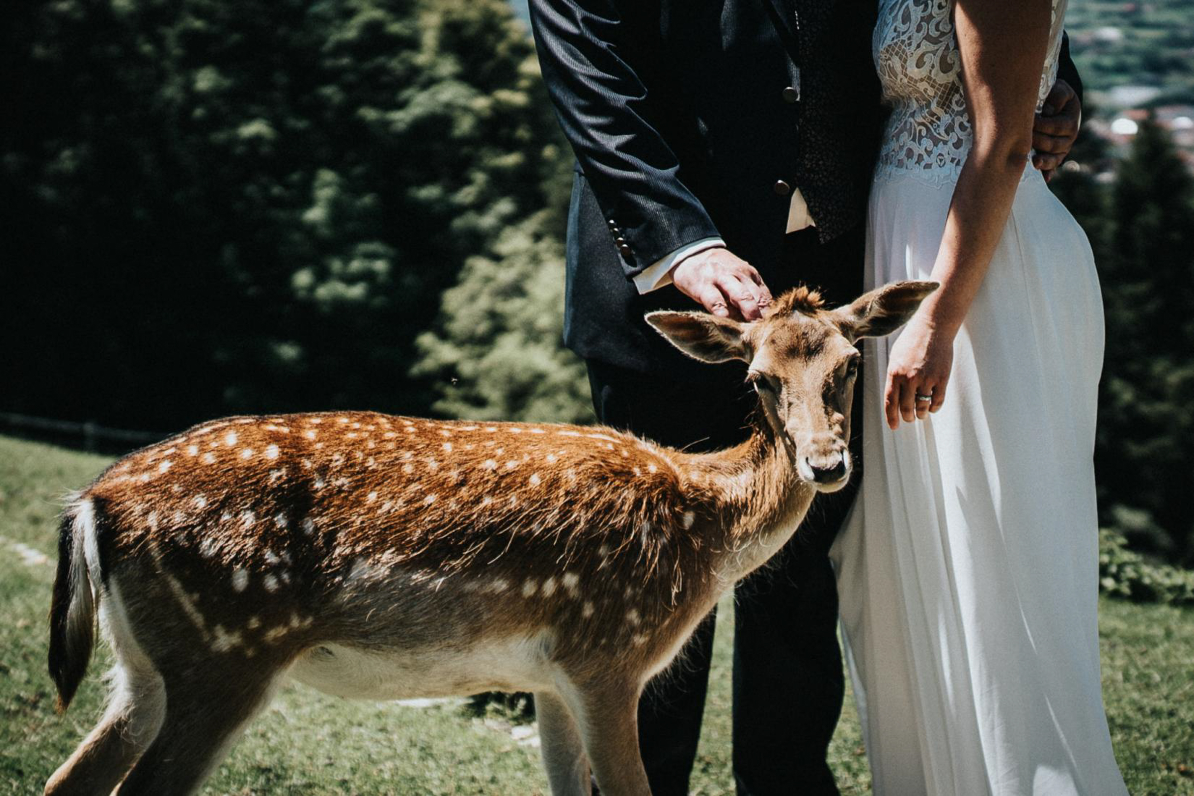 surprise-deer-guest-in-bride-and-groom-portrait-photo-by-fineart-weddings-photography