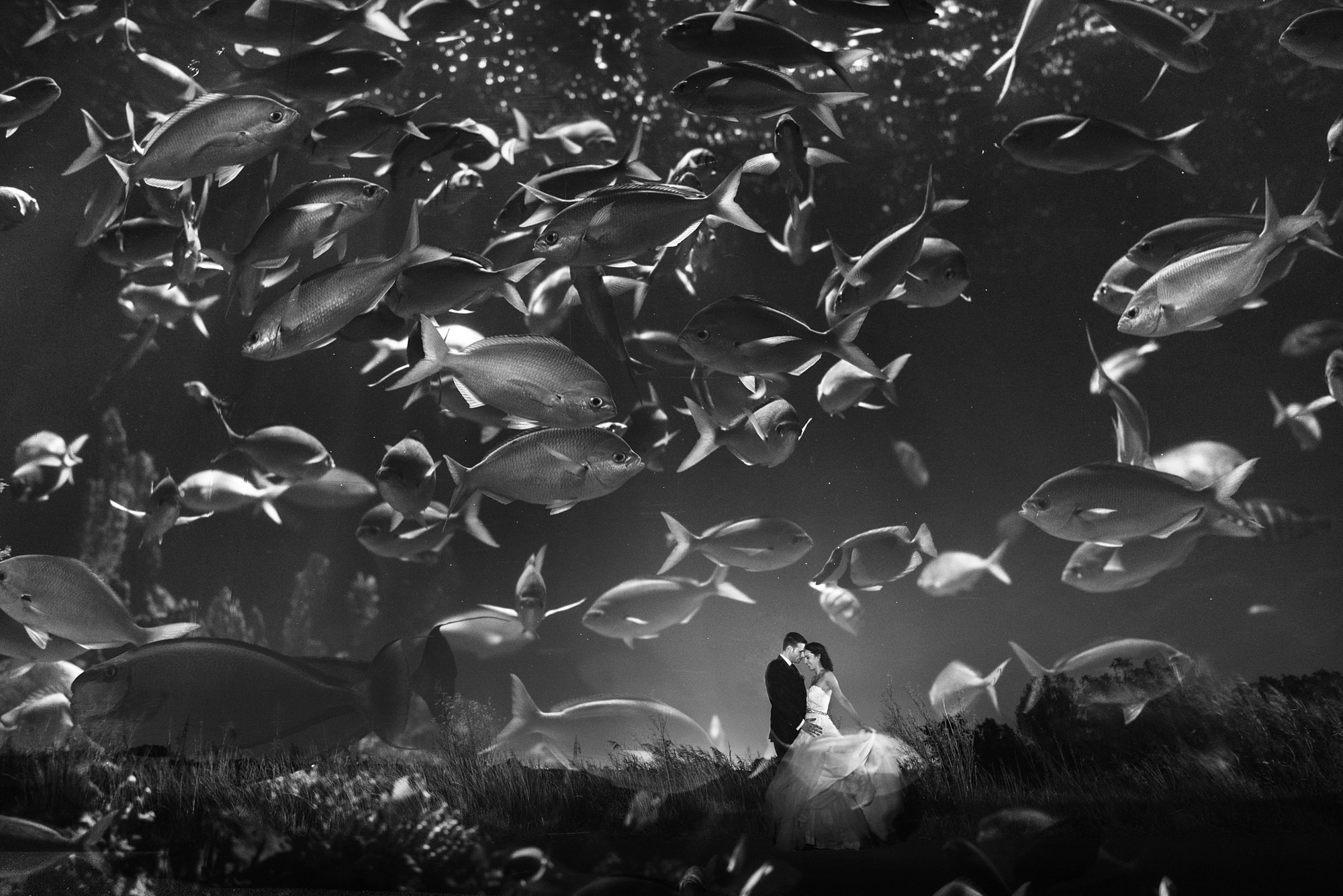 Black and white bride and groom seen through aquarium fish by Look Fotografia