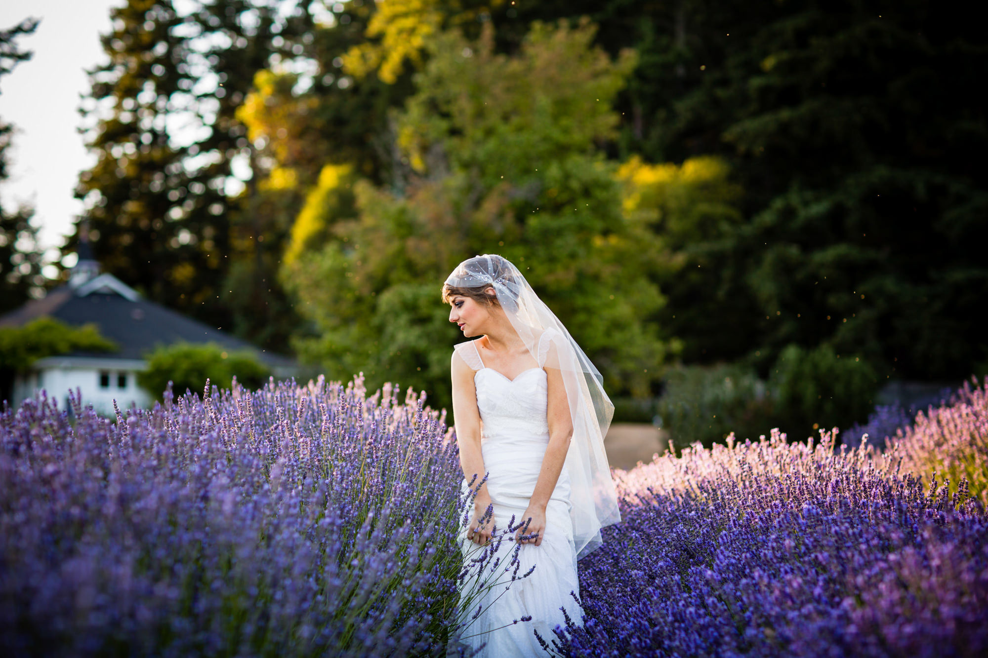 Bride in lavendar field in evening light - La Vie Photography