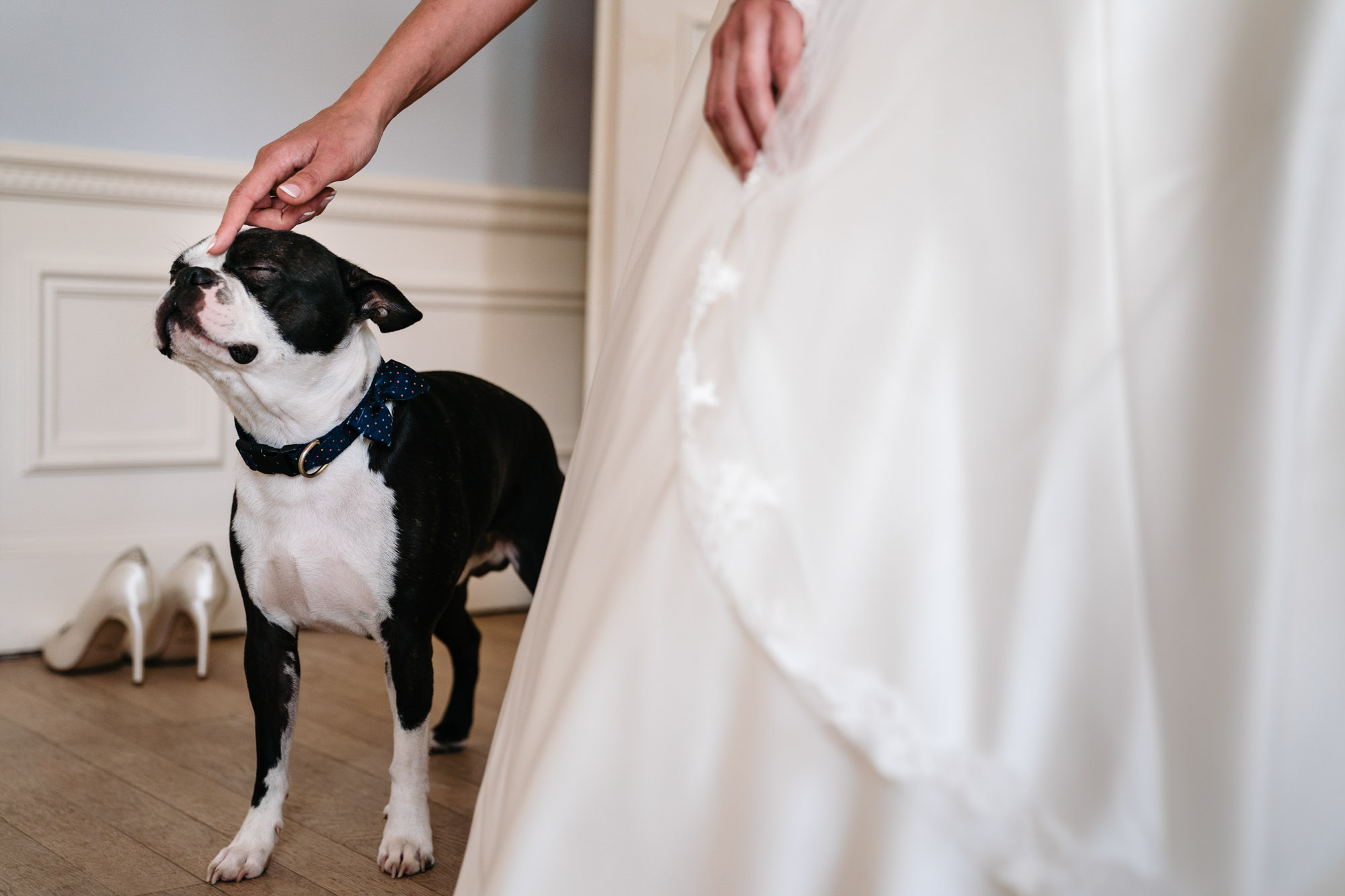 Bride scratches boxers nose  photo by Yves Schepers