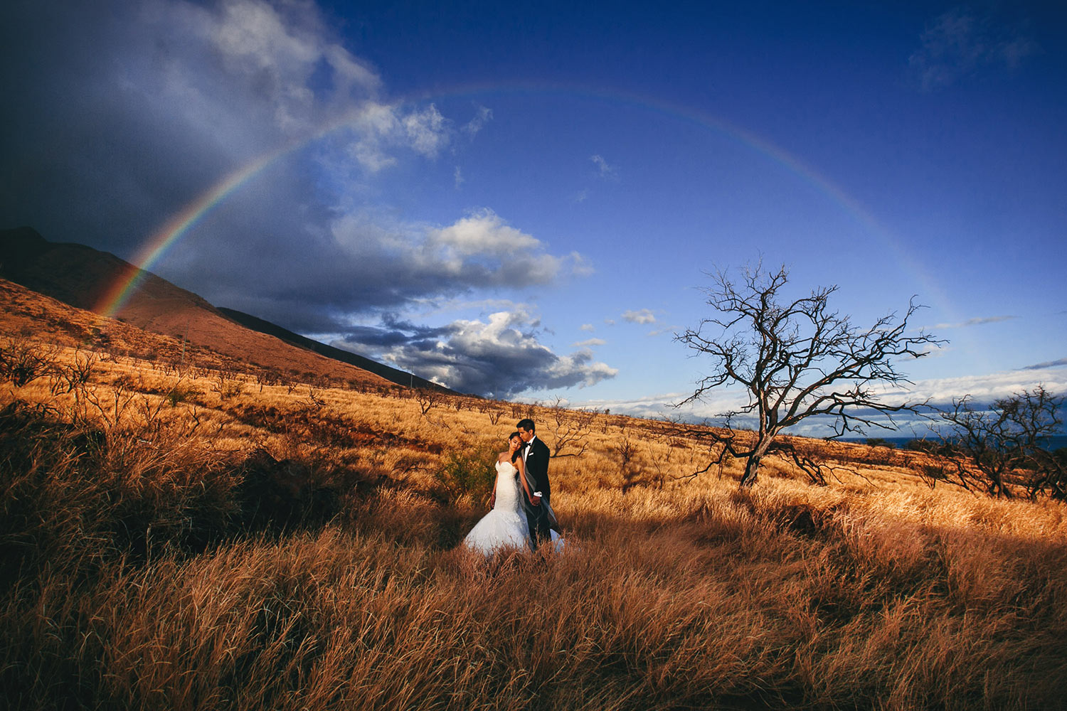Epic photo of bride and groom in golden field of grass against blue sky and rainbow, by Callaway Gable