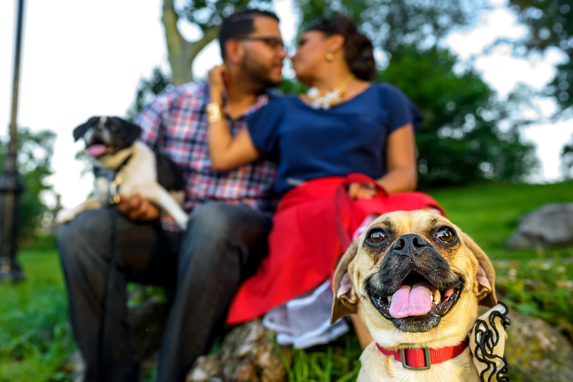 Boxer dogs with engaged couple - photo by Alakija Studios