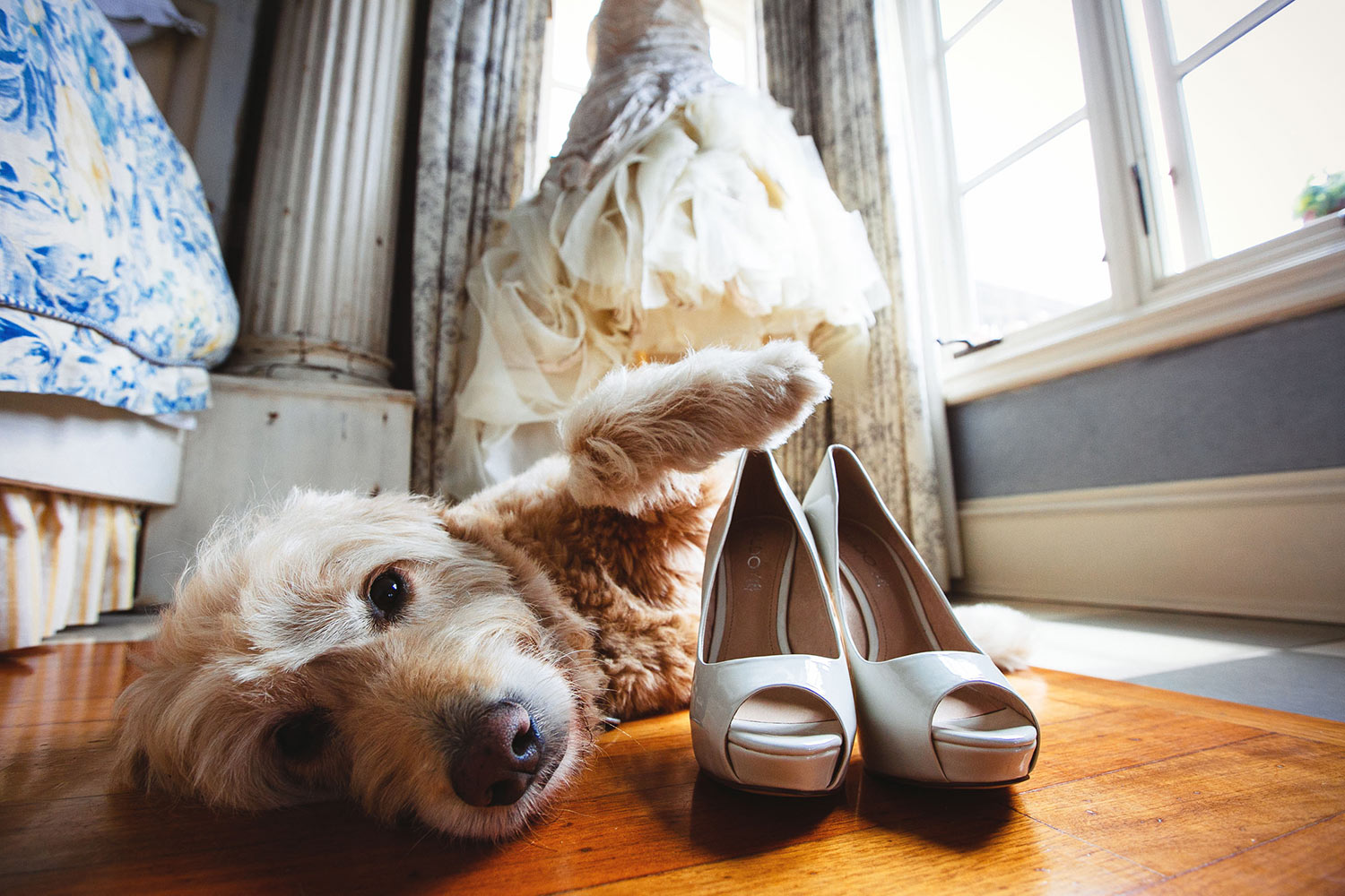 Sweet dog posing with heels and ruffled gown in the background by Callaway Gable