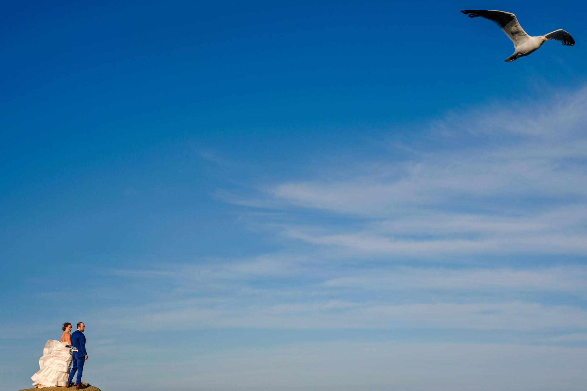 Seagull soars past couple on cliff - photo by Cooked Photography