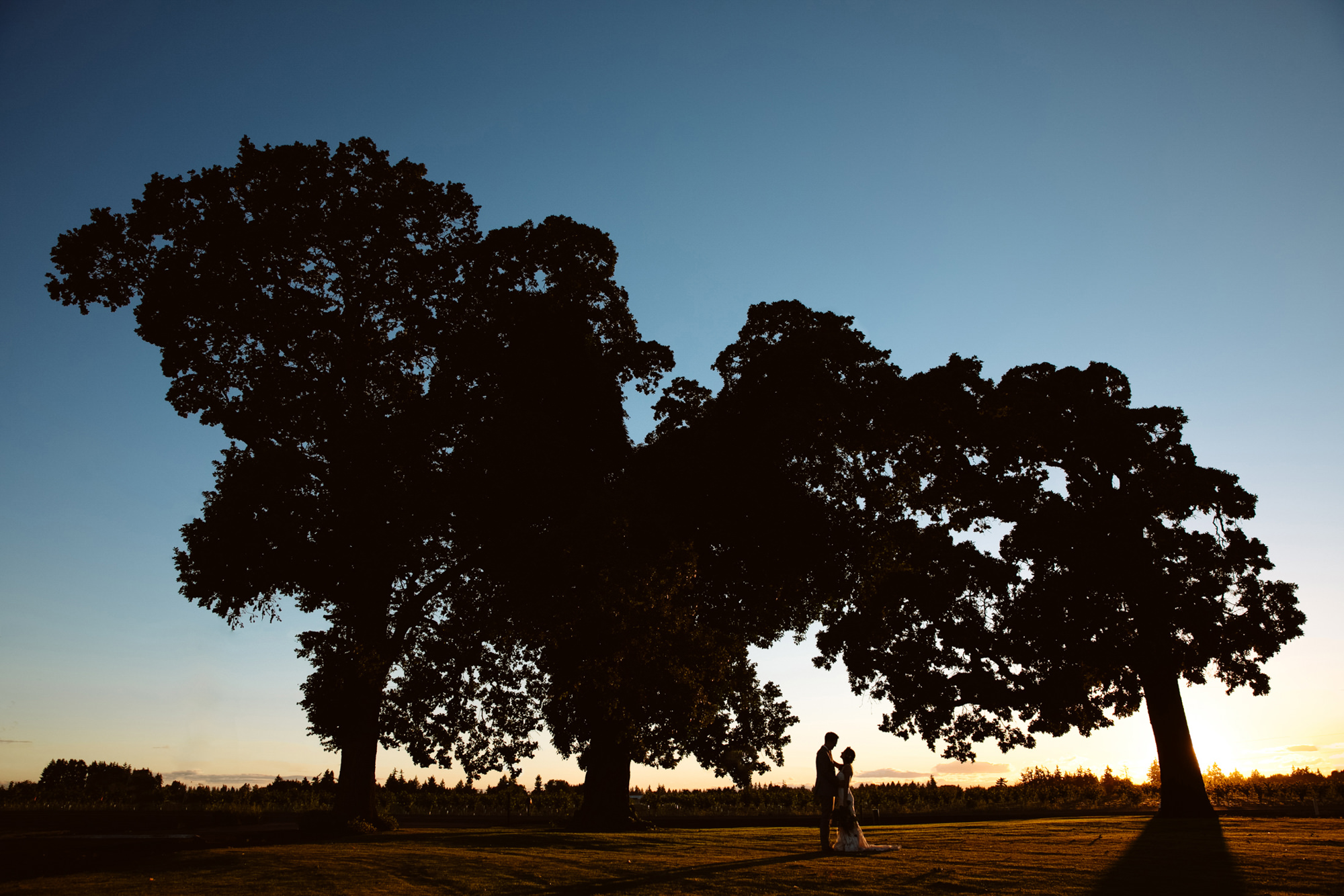 Silhouette of bride and groom under trees - Jessica Hill Photography