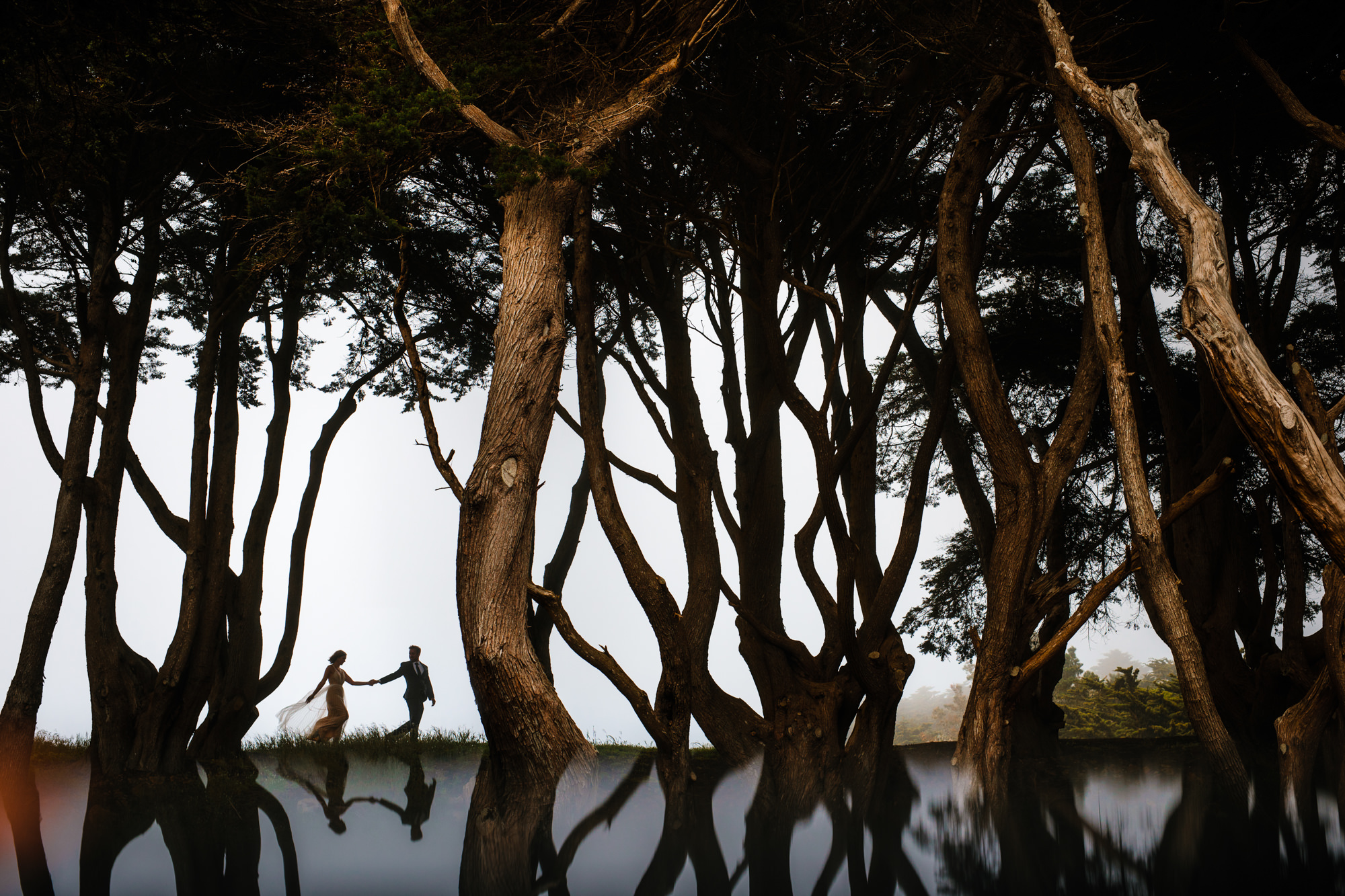 Silhouette reflection of couple woven into shape of trees, photo by Yves Schepers, Belgium wedding photographers