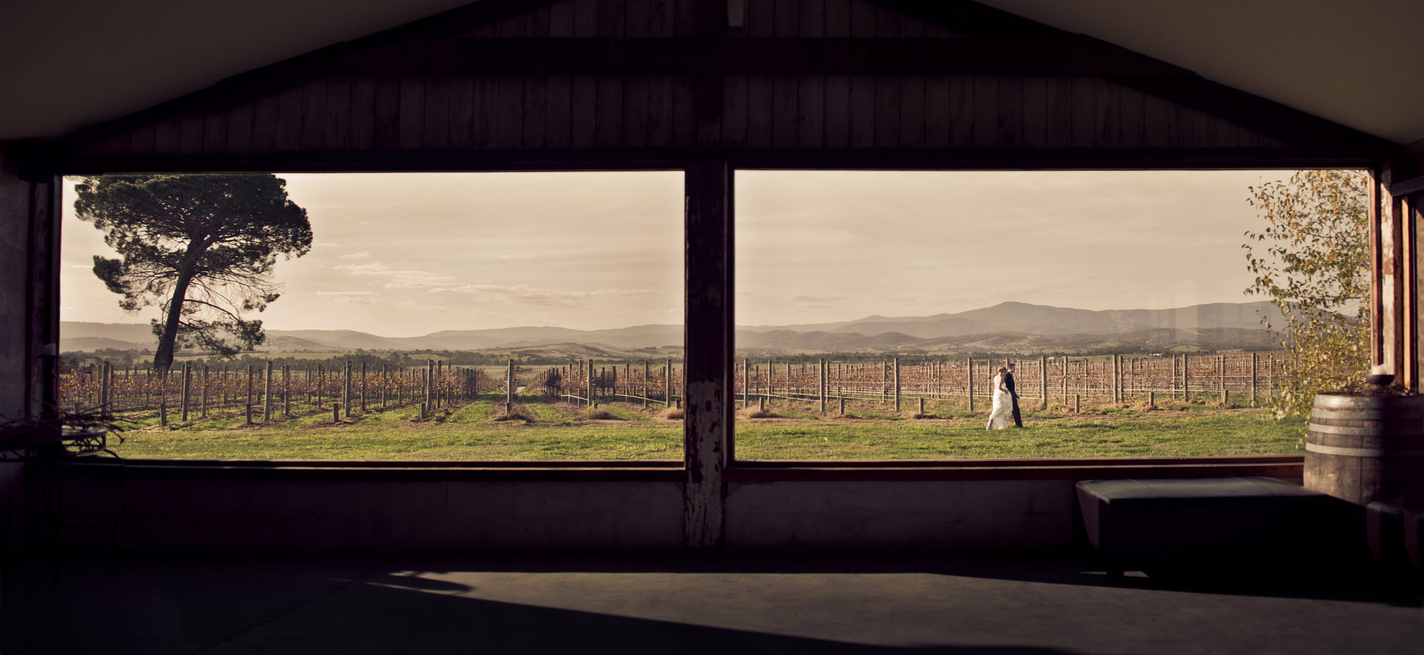 Vineyard landscape with bride and groom  -  photo by Marcus Bell