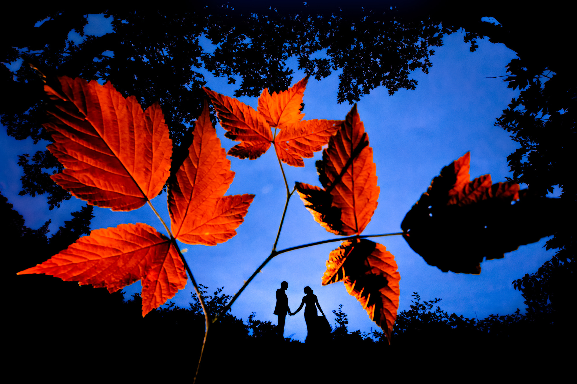 Silhouette of bride and groom behind red autumn leaves - photo by Two Mann Studios