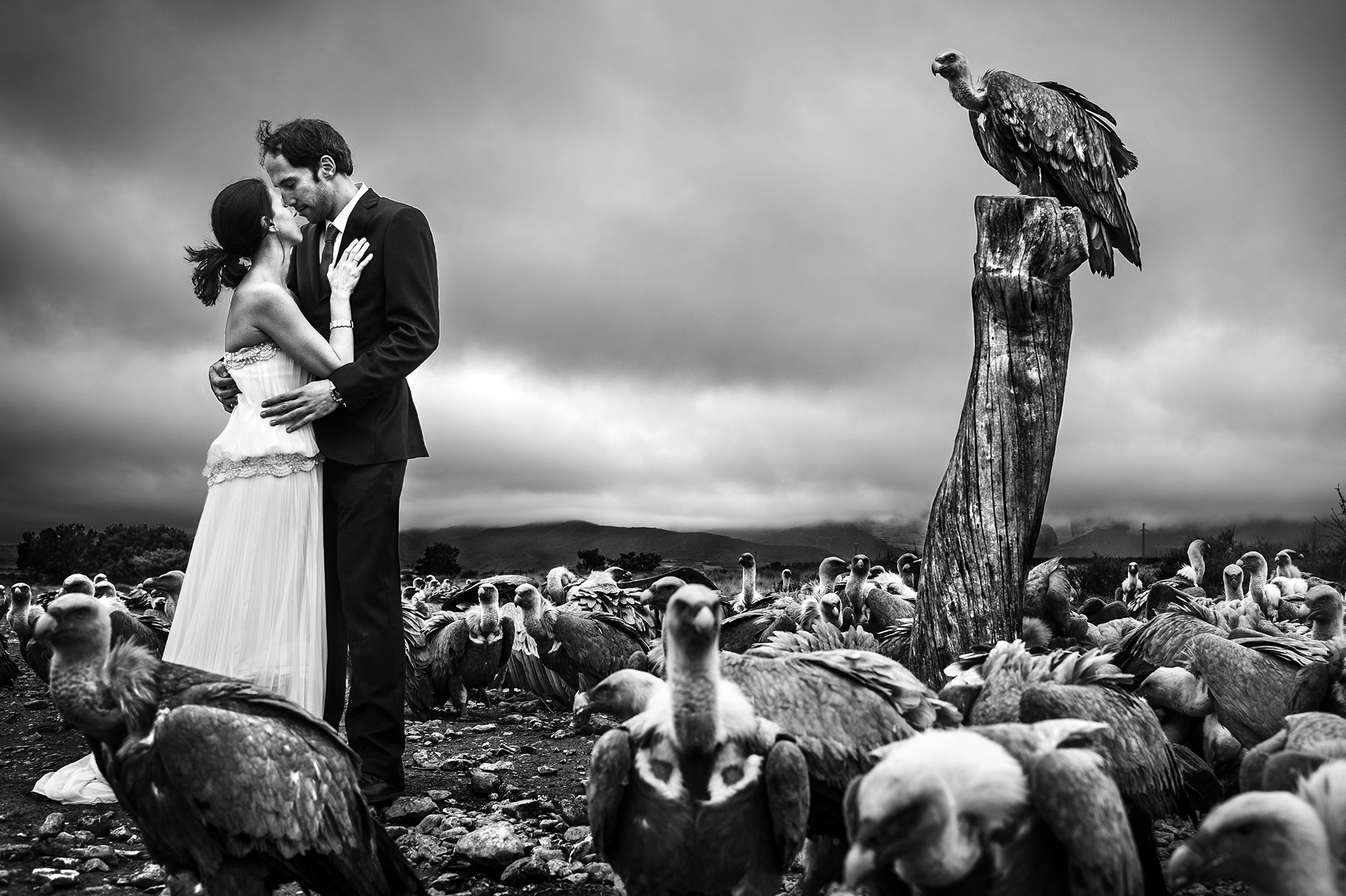 Bride and groom amidst flock of vultures - photo by Victor Lax