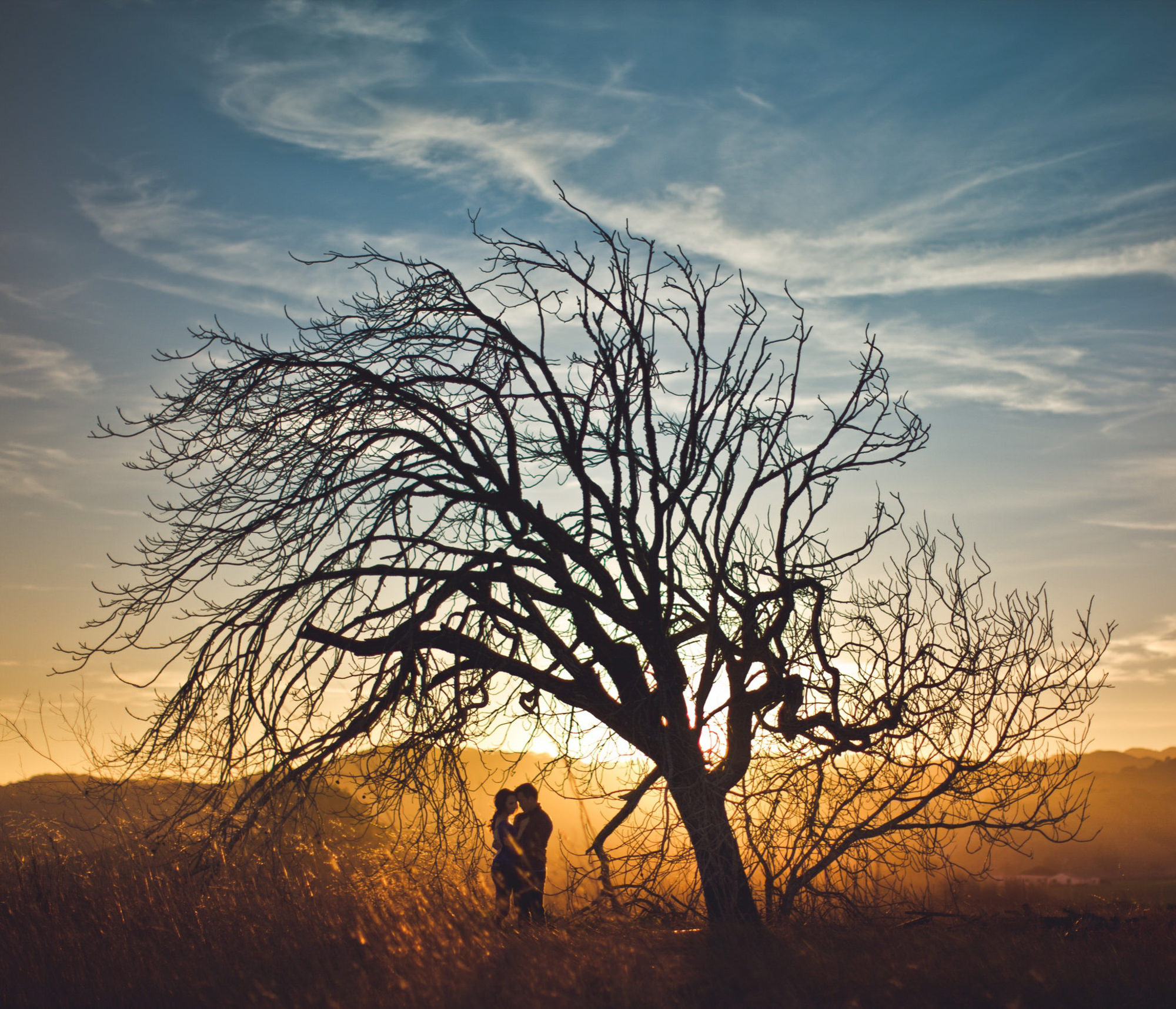 Silhouette of couple under tree in desert, by Jeff Newsom
