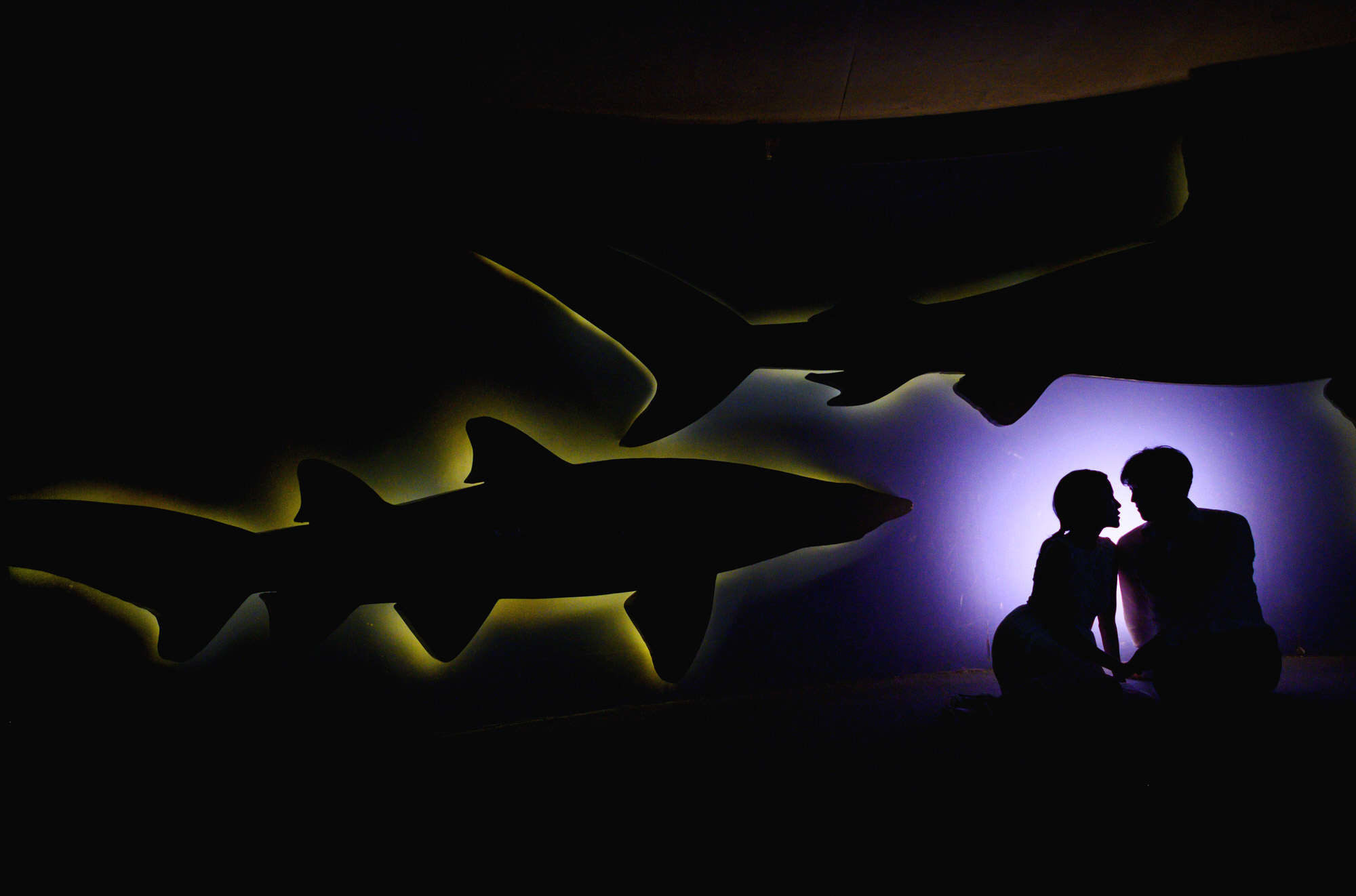 Creative couple silhouette  against sharks - photo by Ken Pak