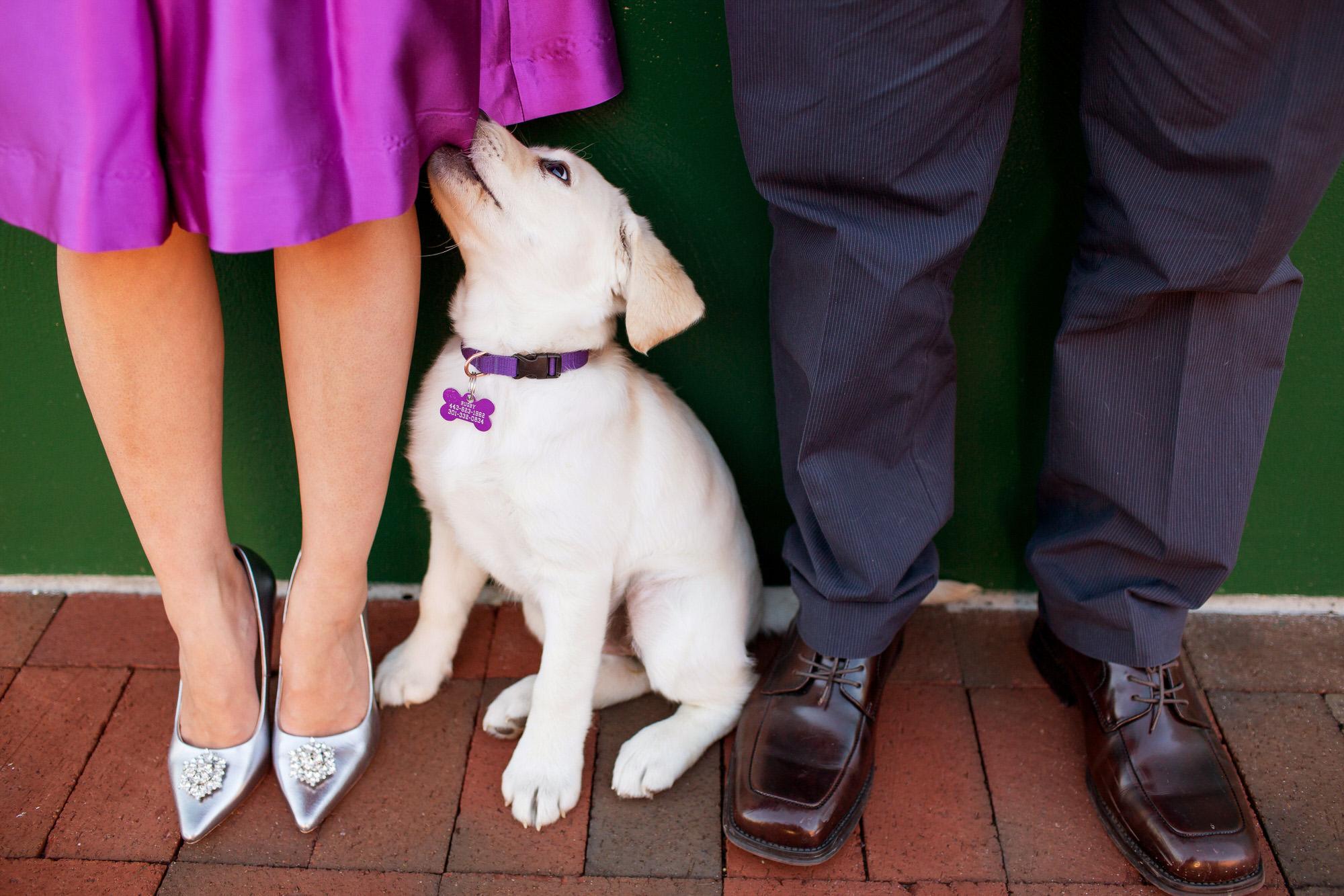 Cute dog looks up skirl - photo by Ken Pak