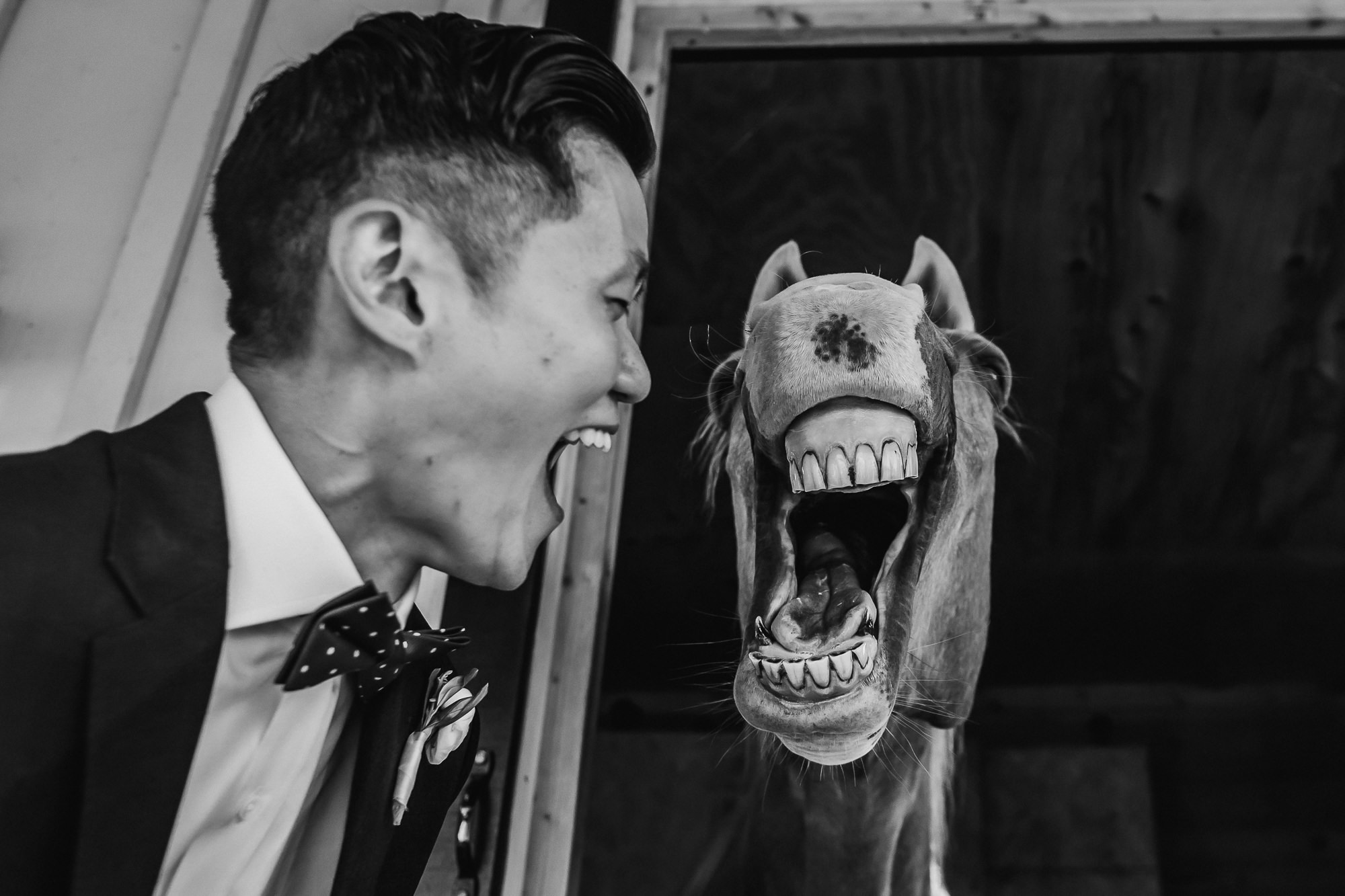 Hilarious photo of groom and picture of horse - photo by Ken Pak