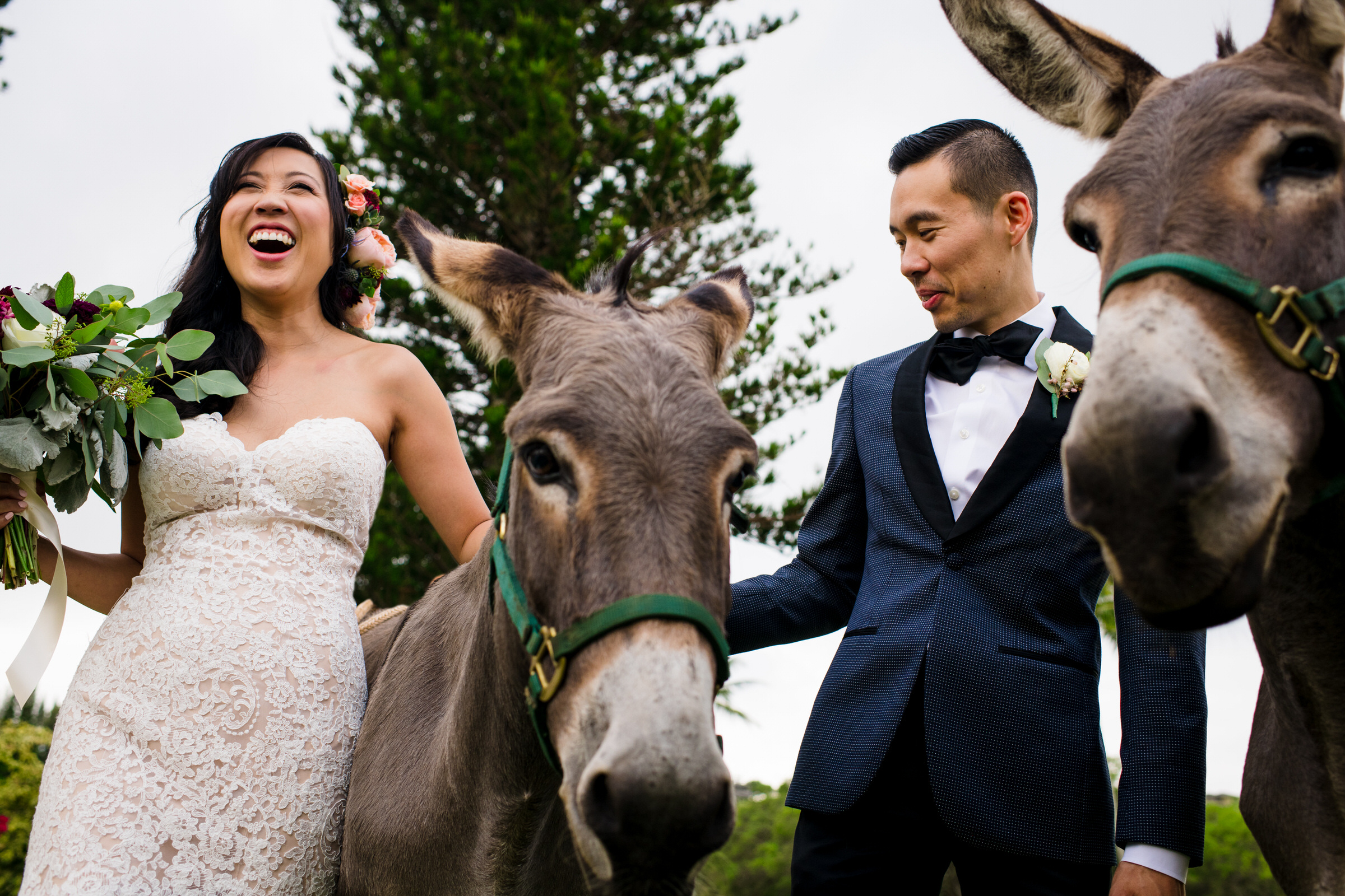 Couple portrait with donkeys - photo by Angela Nelson Photography
