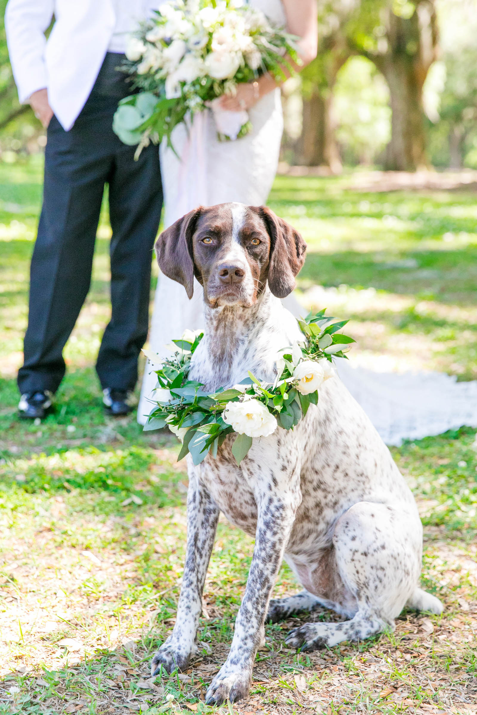 Dog portrait with bride and groom - photo by Dana Cubbage Weddings