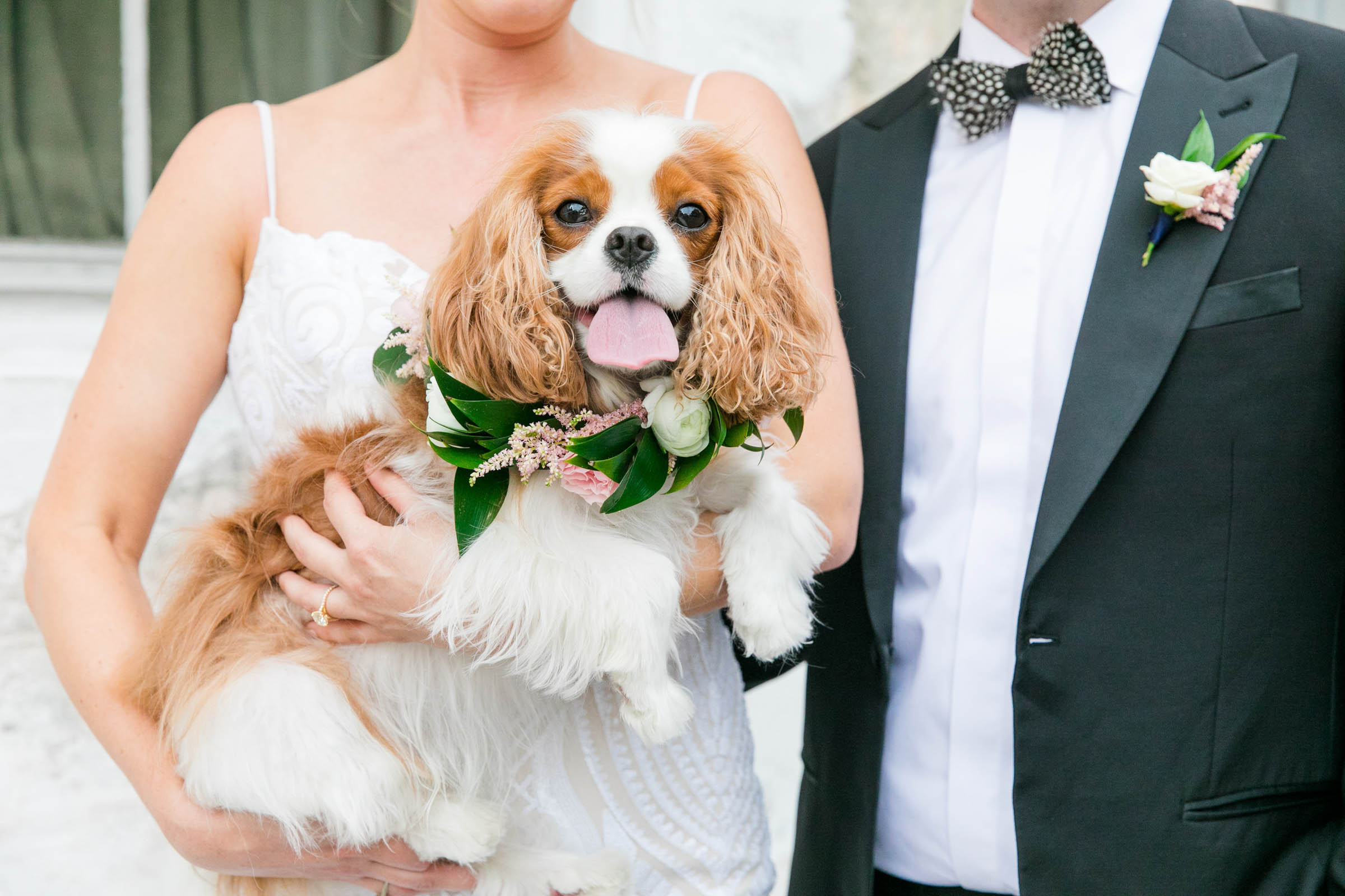 Groom and bride holding dog - photo by Dana Cubbage Weddings