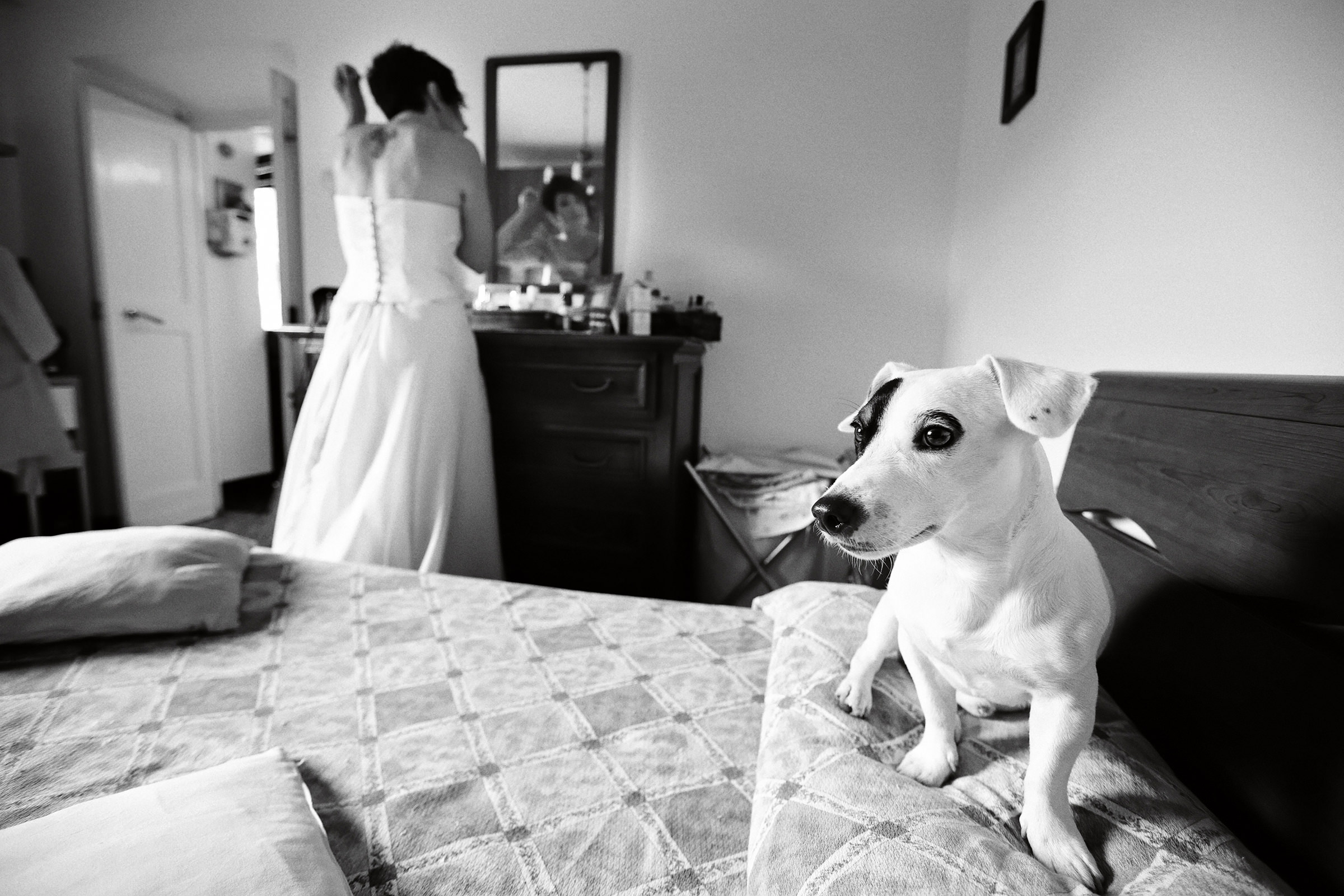 Bride getting ready with dog on bed - photo by Andrea Bagnasco Fotografie