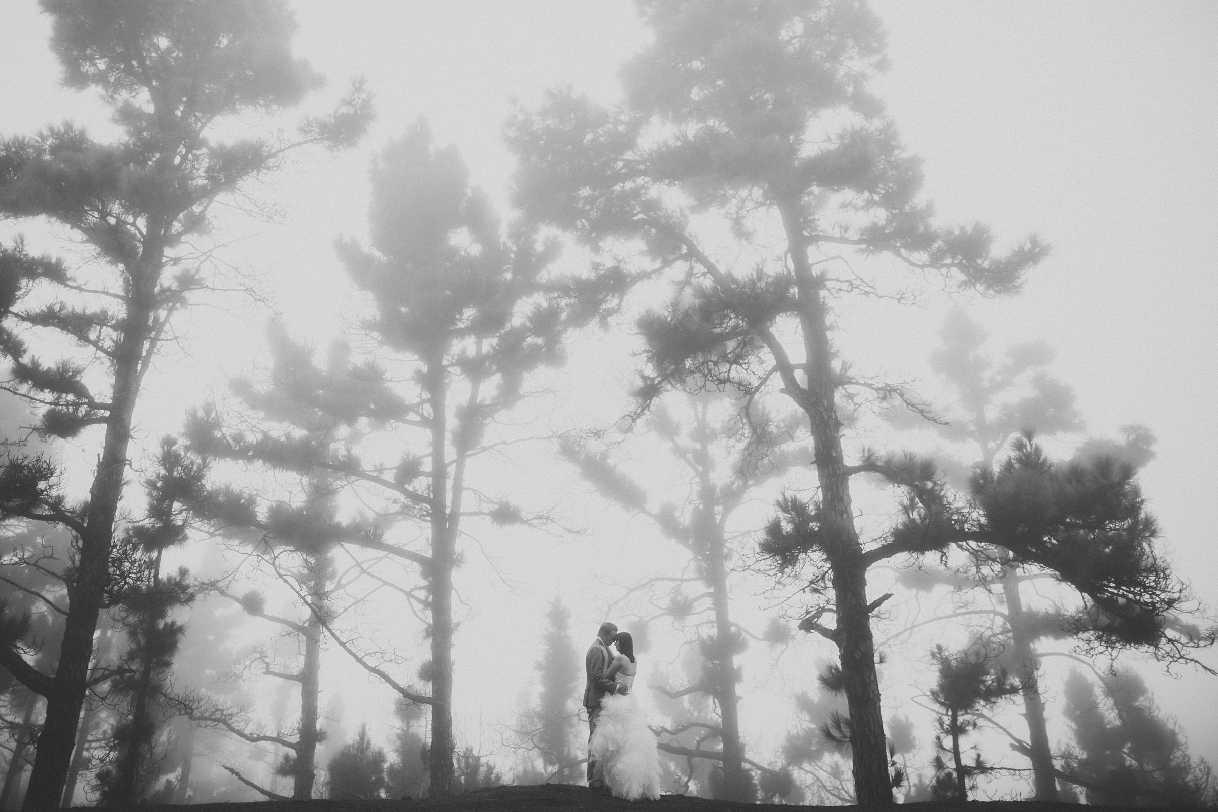 Atmospheric couple against trees -  photo by Ed Peers Photography