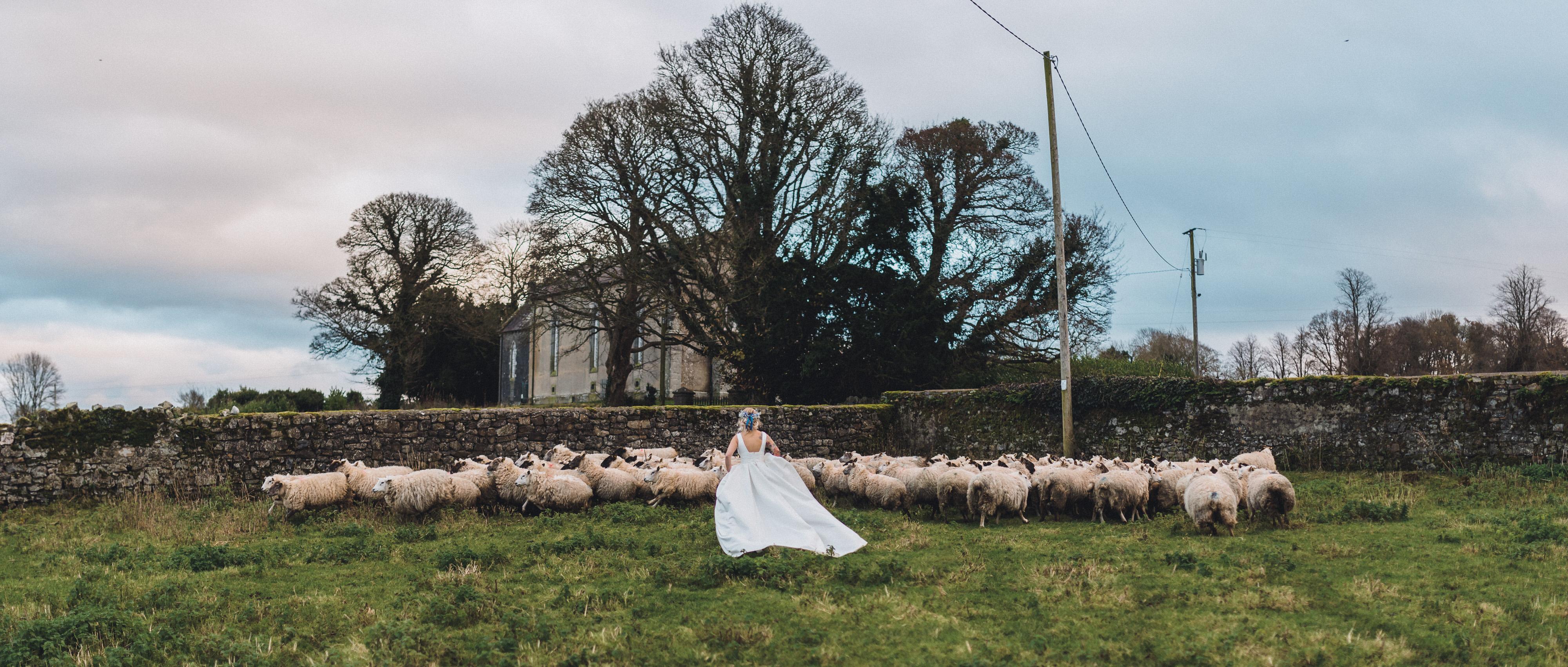 Bride running toward flock of sheep - photo by John Gillooley
