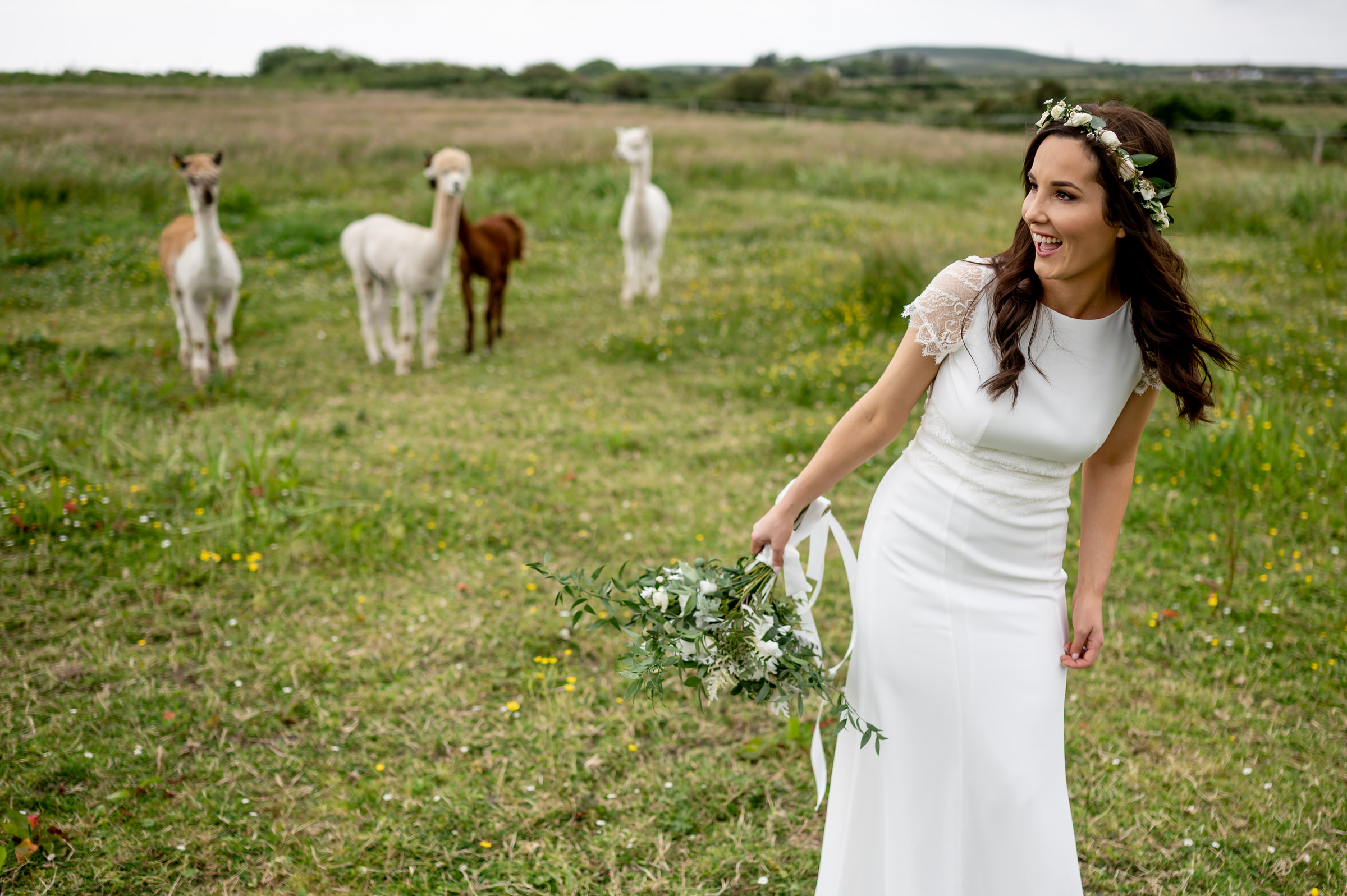 Bride near alpacas - photo by John Gillooley