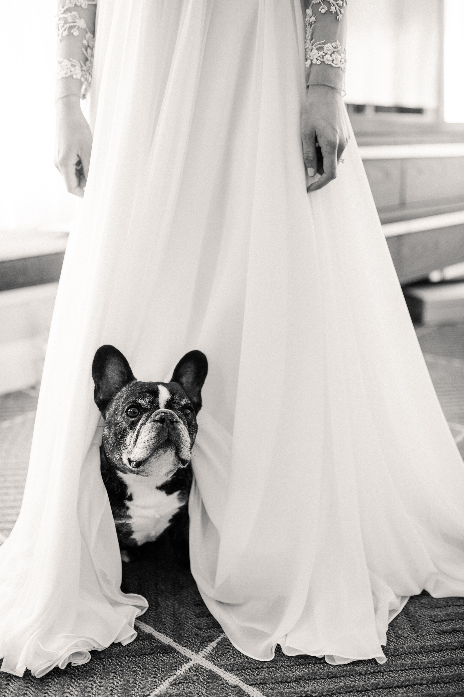 Dog peering out from wedding gown - photo by M&J Studios