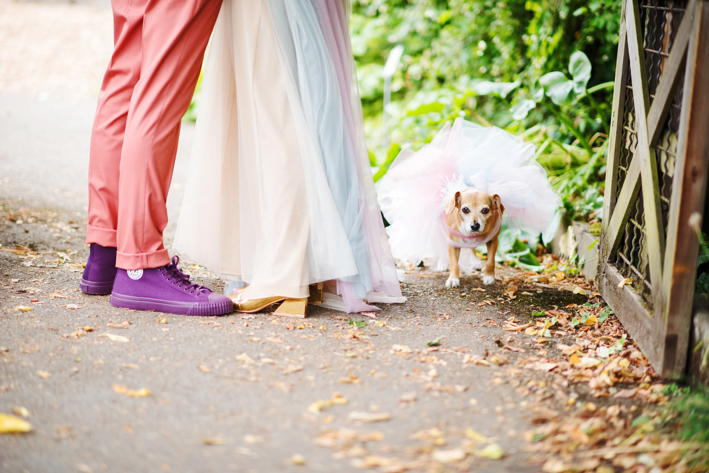 Couple feet with dog in tutu - photo by Barbie Hull Photography