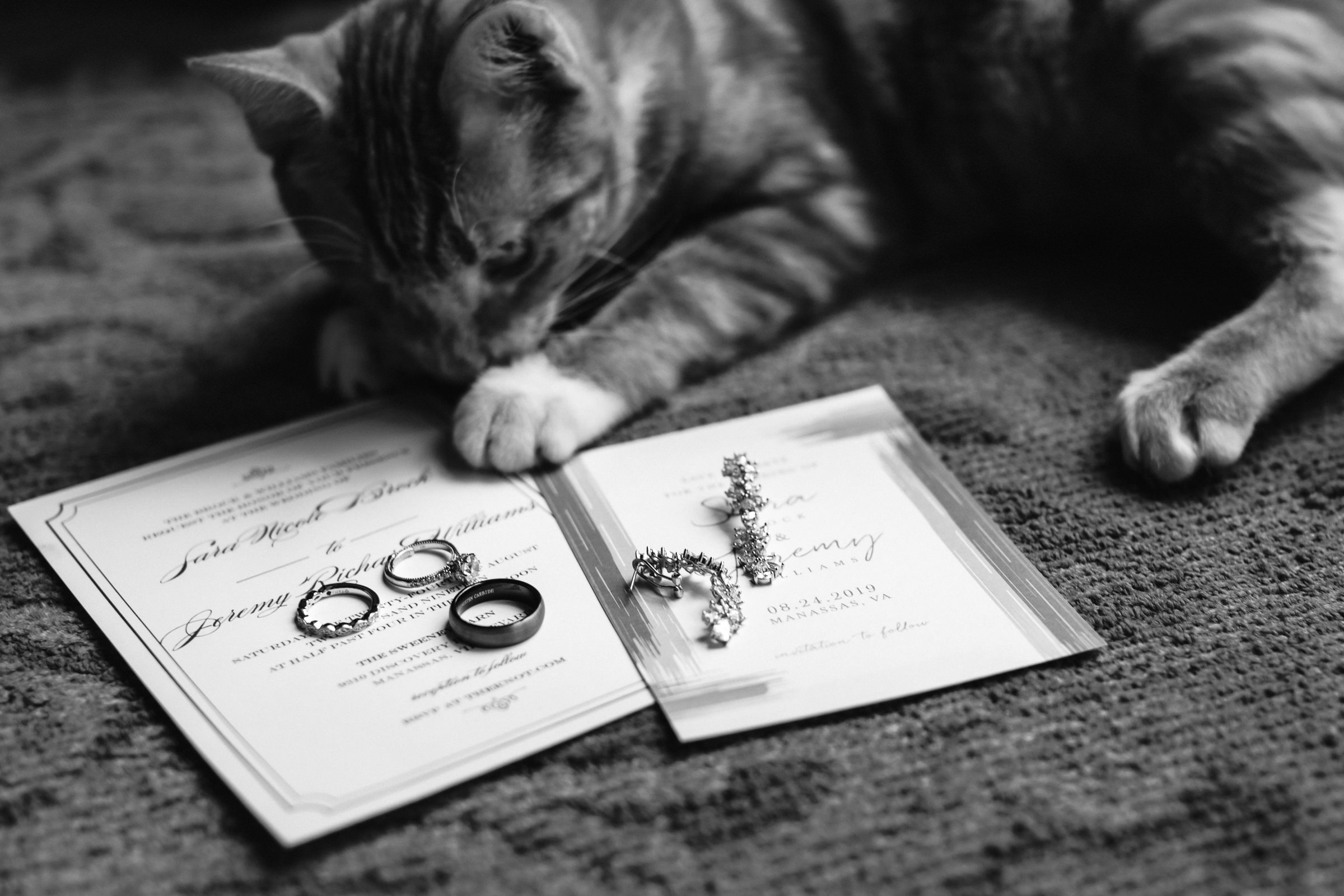 Flat lay of rings earrings and invitations with cat - photo by Xiaoqi Li Photography