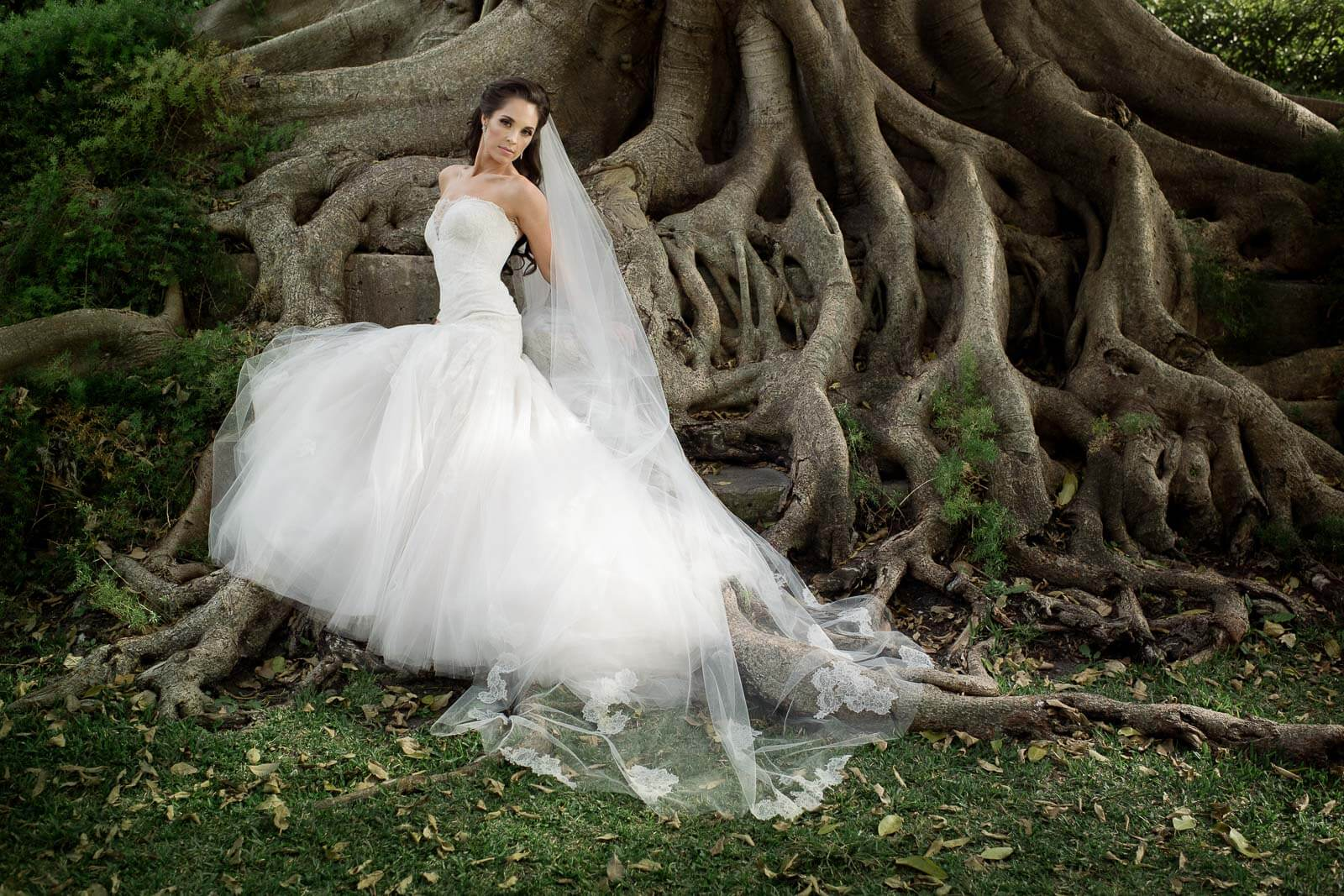 Bride pose against mammoth tree roots - photo by Maloman Studios