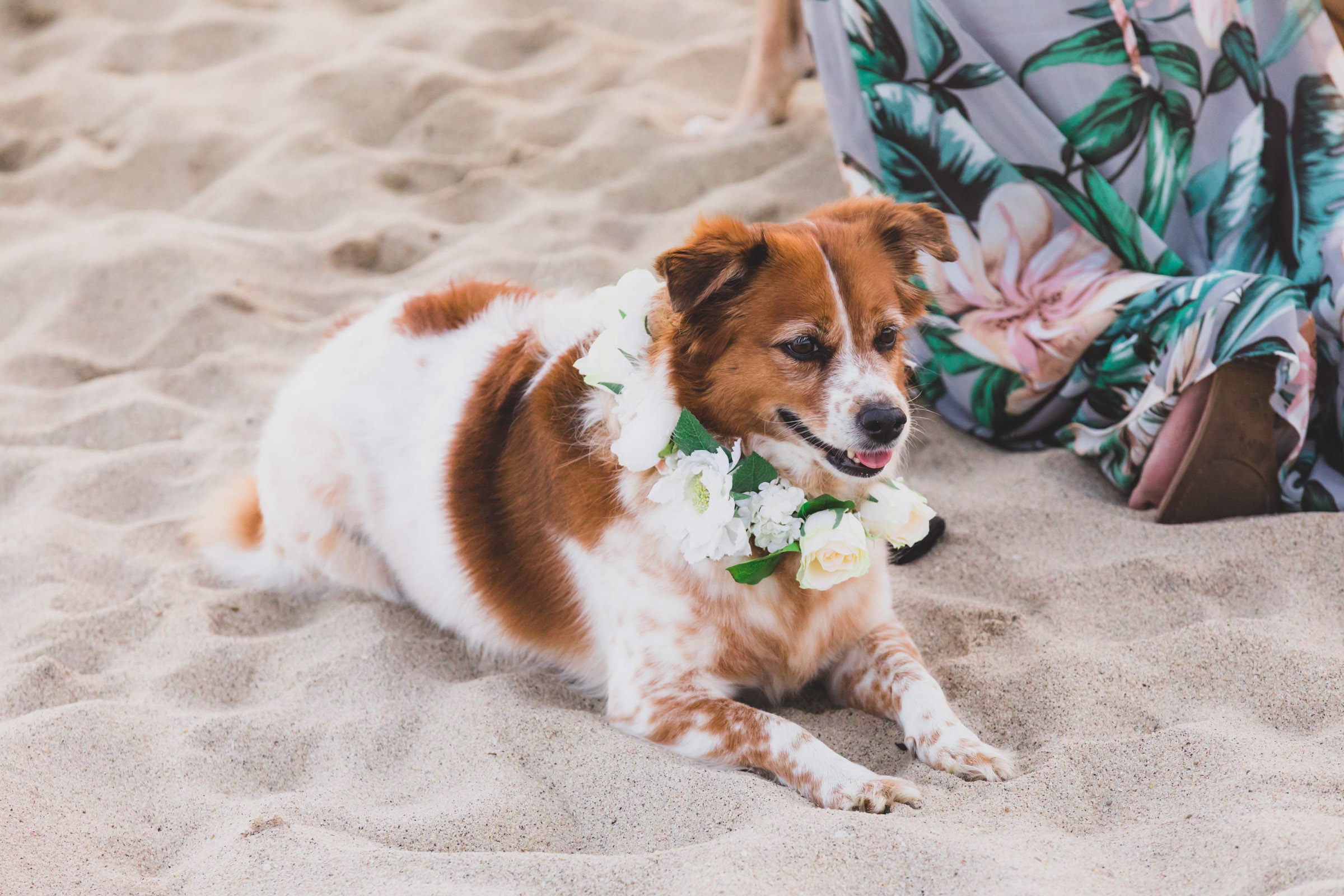 Dog in sand wearing floral necklace - photo by Katie Kaizer Photography
