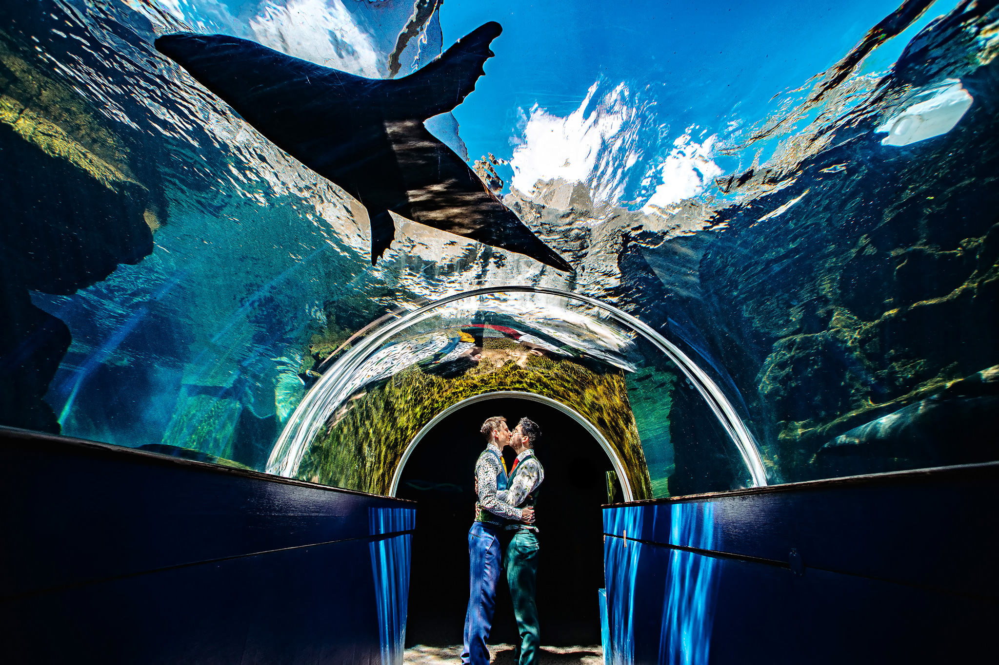 Grooms kissing underneath fish tank with dolphin- photo by Rich Howman