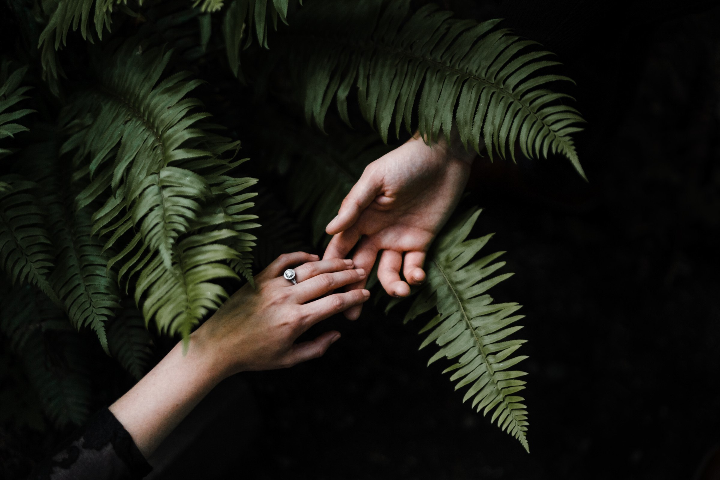 hands touching over fern fronds - photo by Sasha Reiko Photography