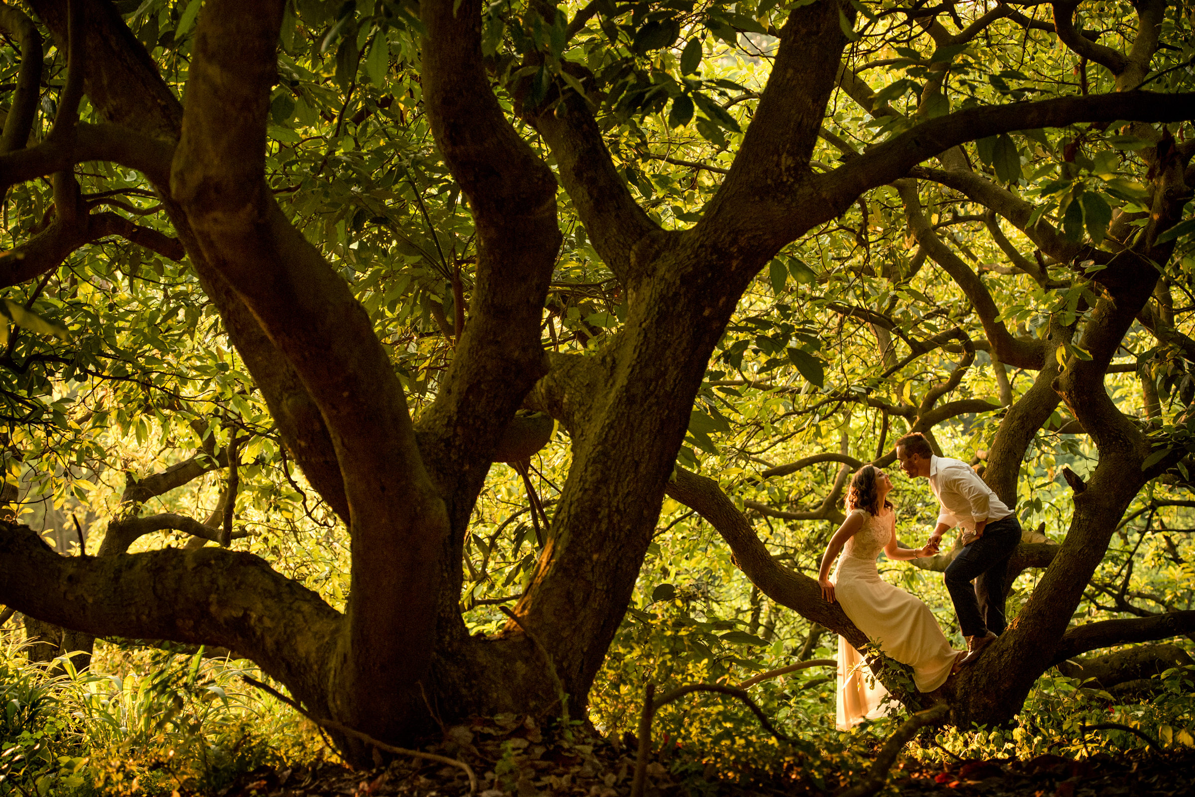 Couple kisses in beautifully lit Banyan tress - photo by Jacki Bruniquel