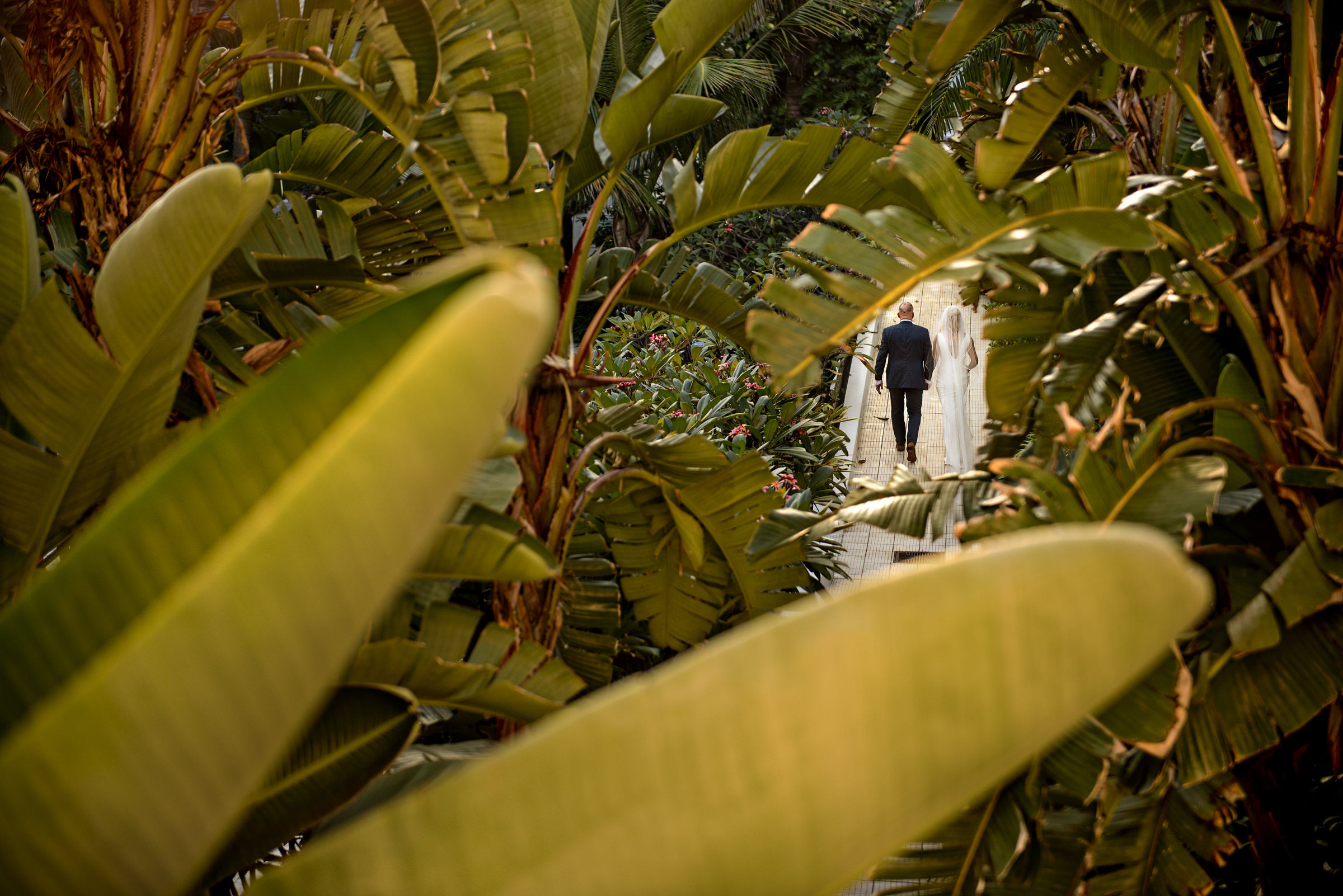 Father and bride walk down the aisle seen through tropical leaves - photo by Jacki Bruniquel