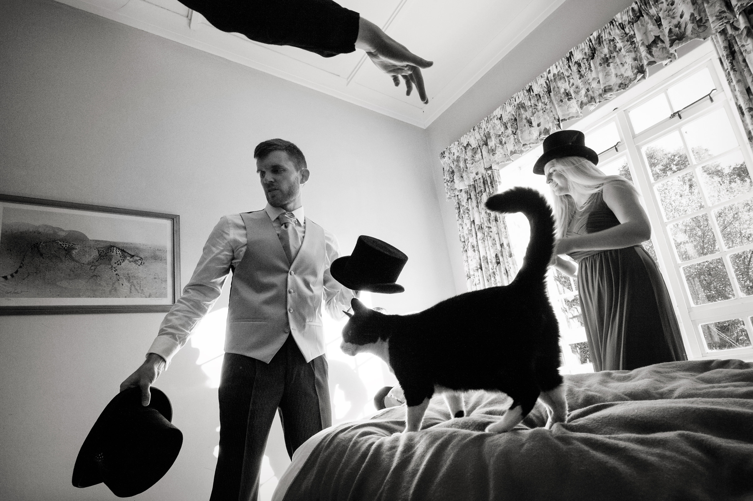 Man appears to throw Top Hat on cat - photo by Jacki Bruniquel