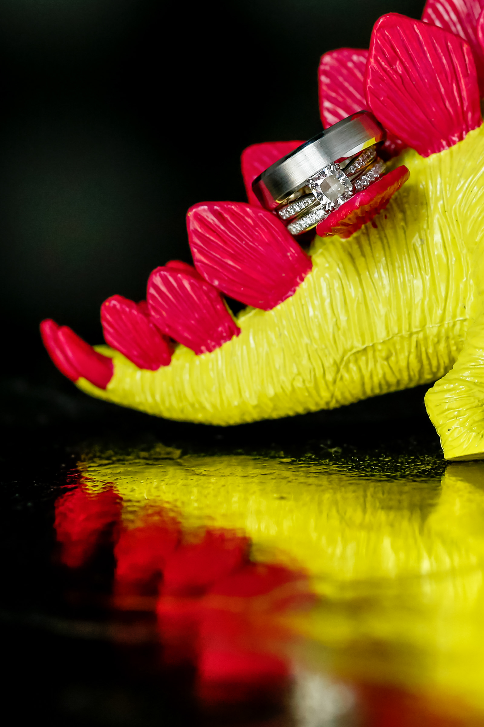 Rings displayed back of toy dinosaur - photo by Procopio Photography