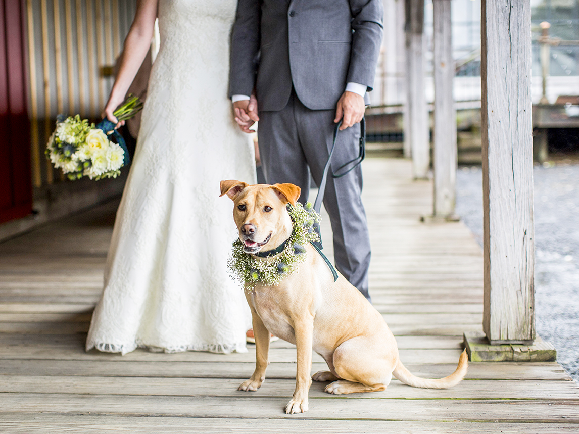 Portrait of dog with floral collar with couple - photo by Anna Schmidt Photography