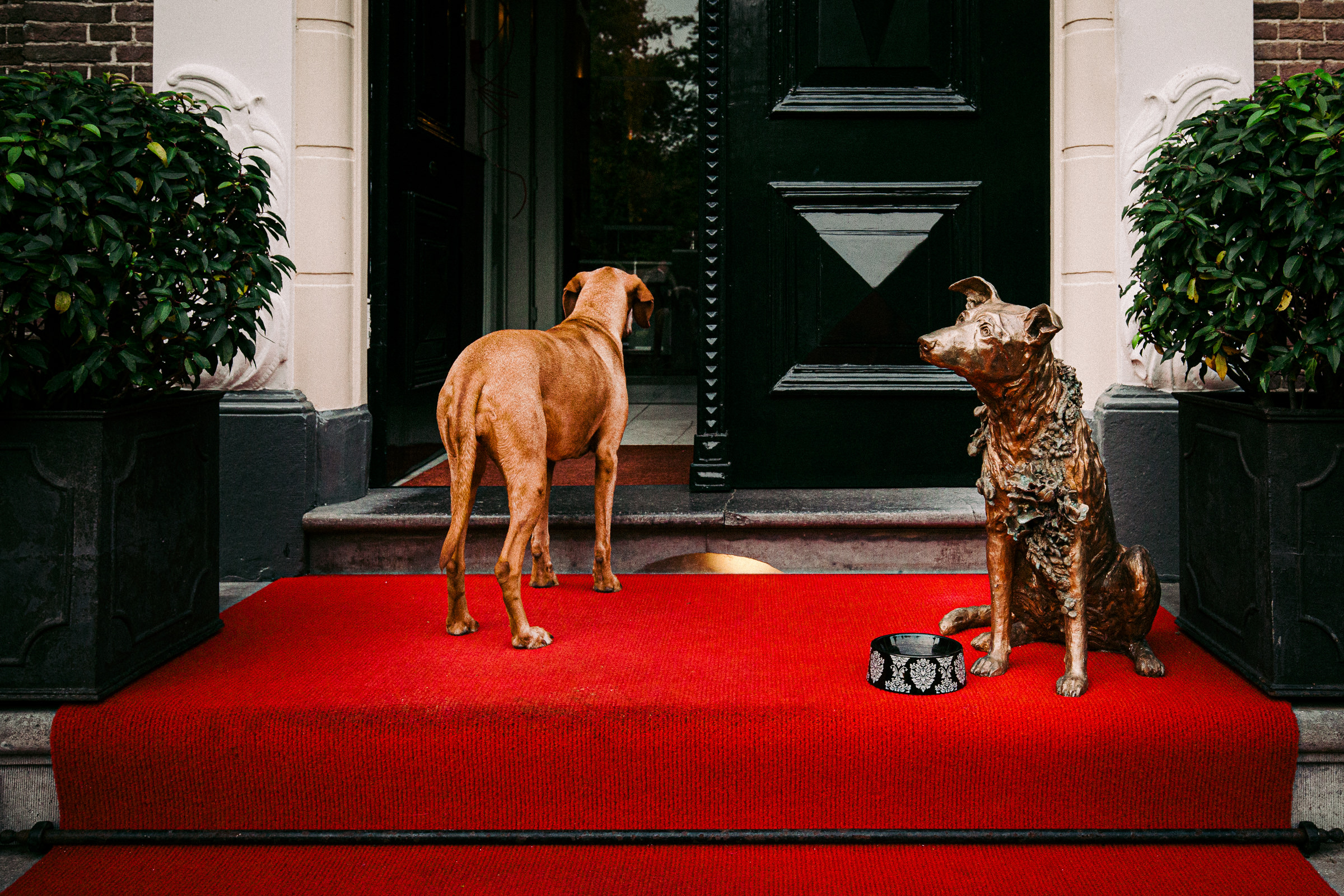 Dog and dog sculpture on the red carpet - photo by Peter van der Lingen Wedding Photography