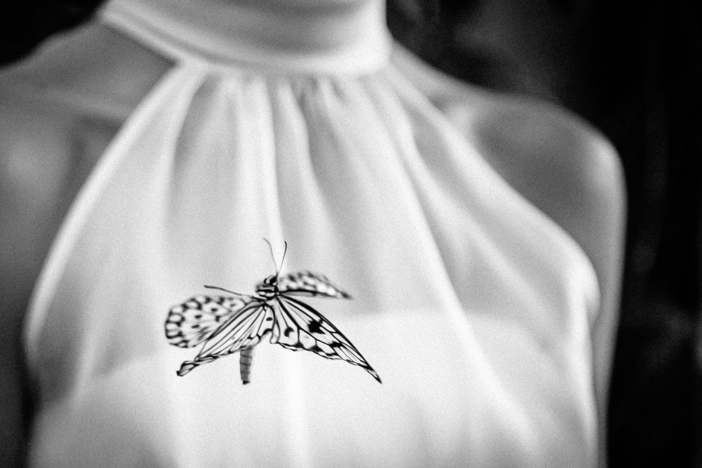 Monarch butterfly against bridal gown - photo by Peter van der Lingen Wedding Photography