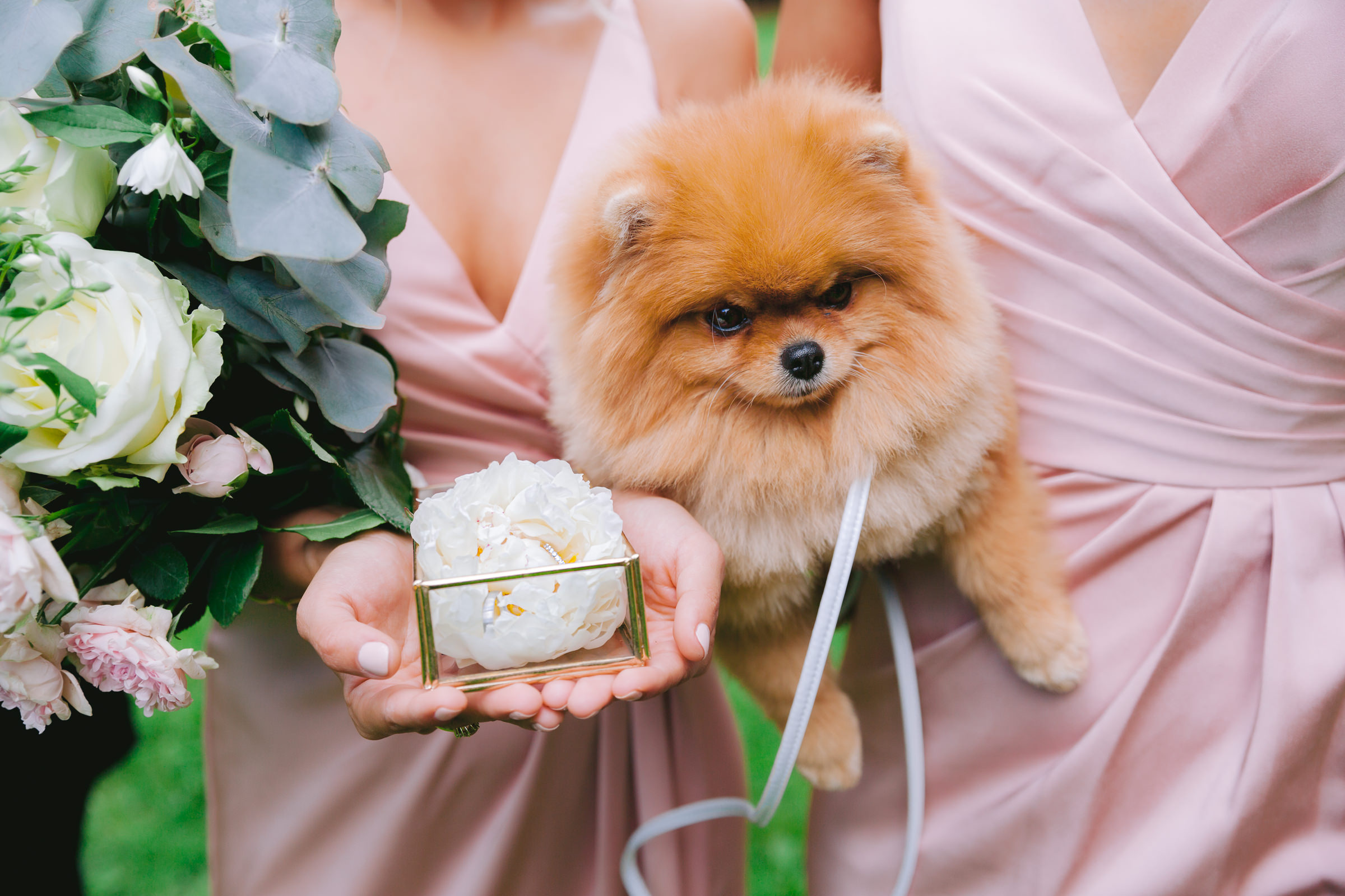 Pomeranian puppy being held by bridesmaids - photo by Peter van der Lingen Wedding Photography