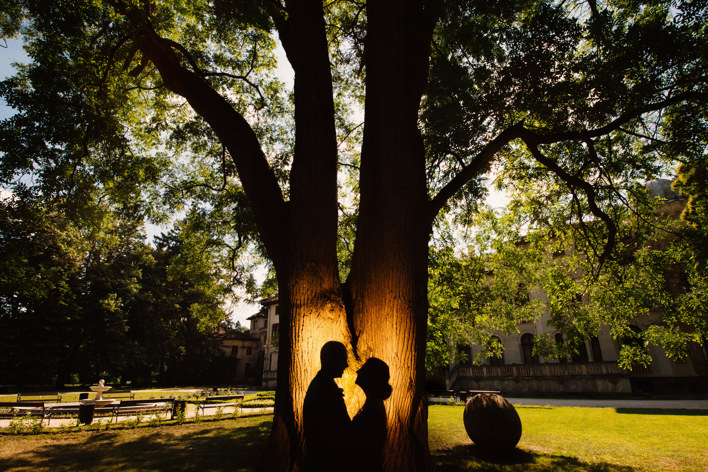 Silhouette couple against large tree - photo by Deliysky Studio